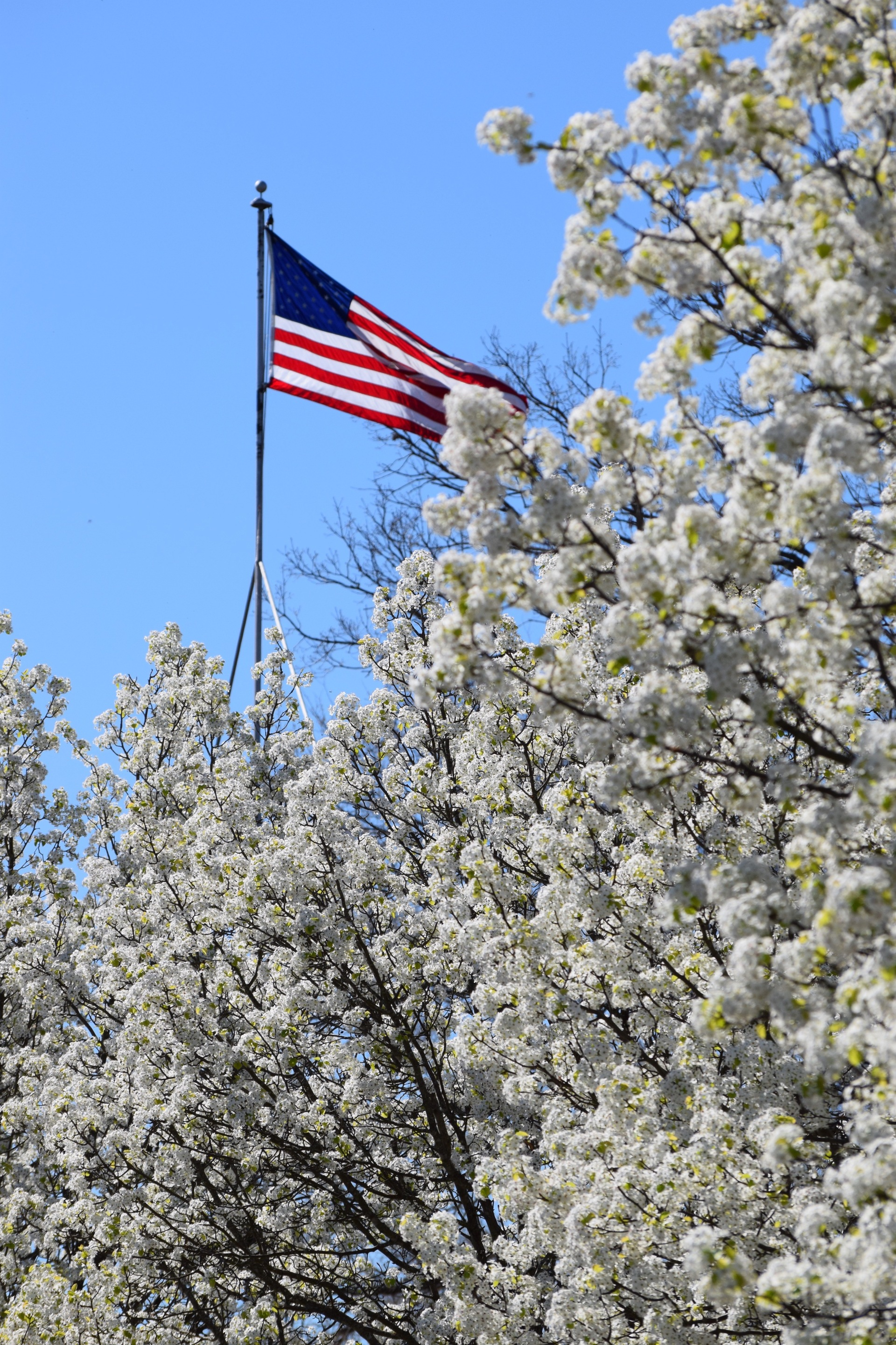 American flag with trees branch