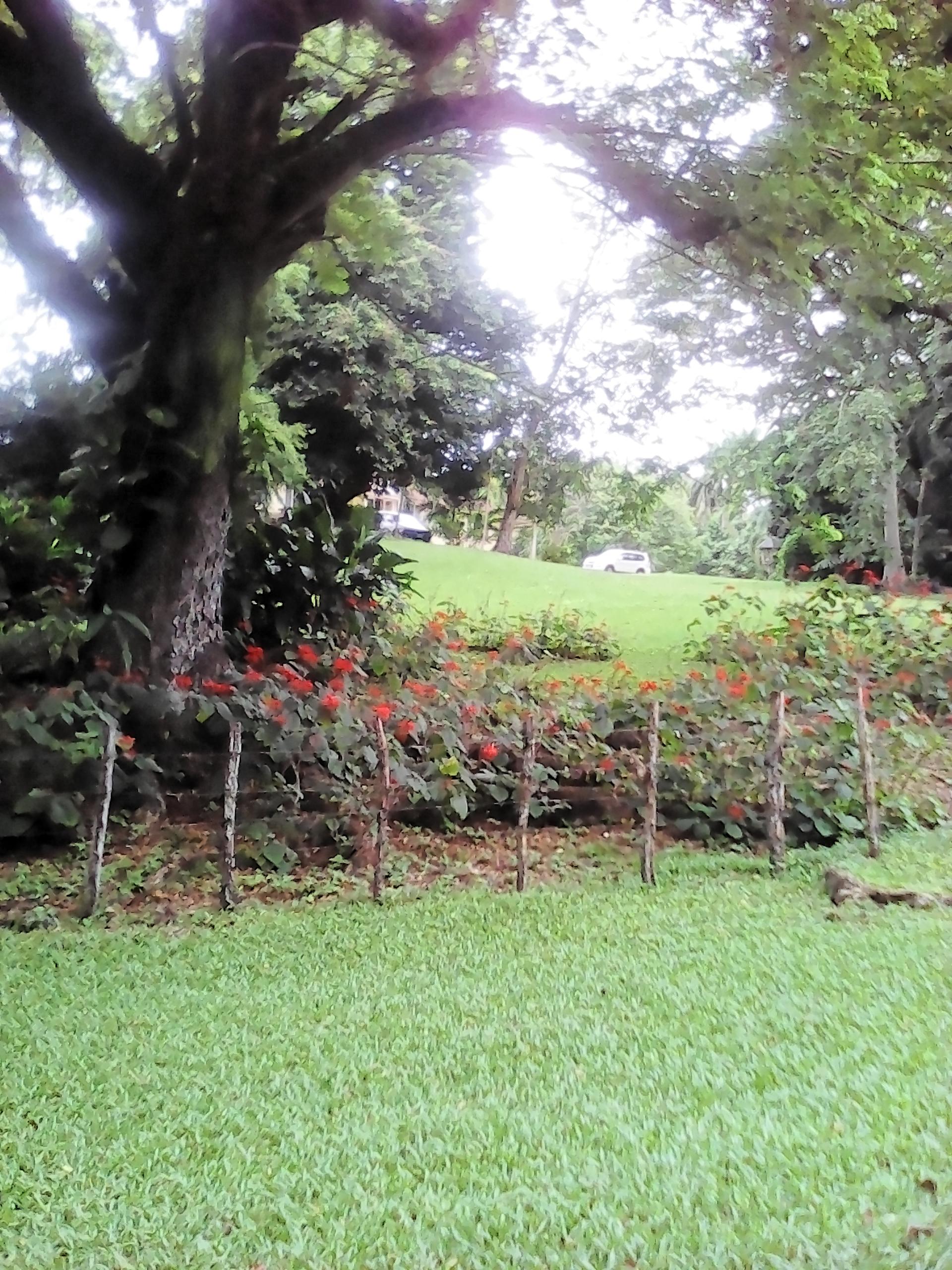 Small Landscape | jacquelin, tree, landscape, grass