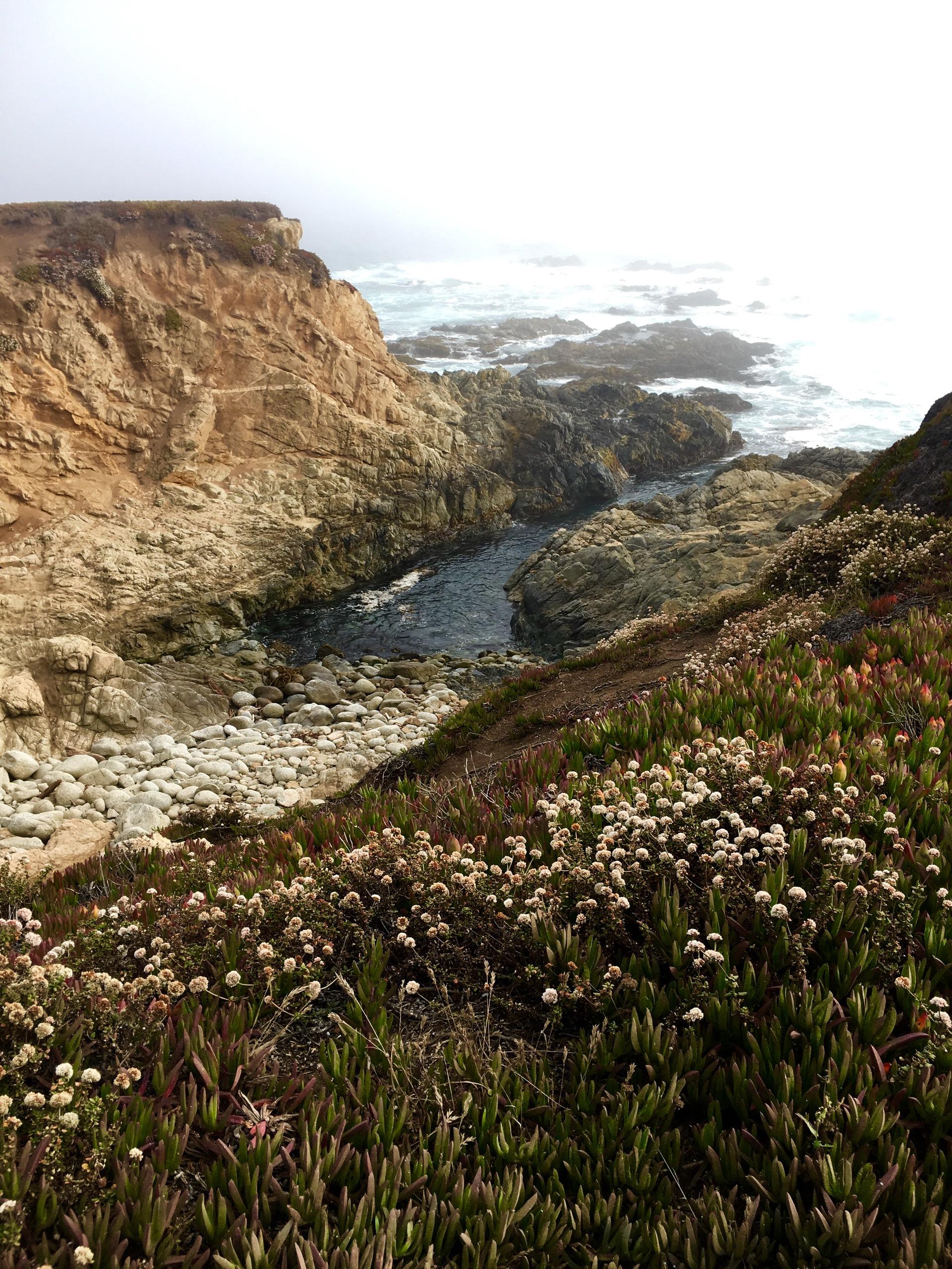 Scenic view of wildflowers near sea