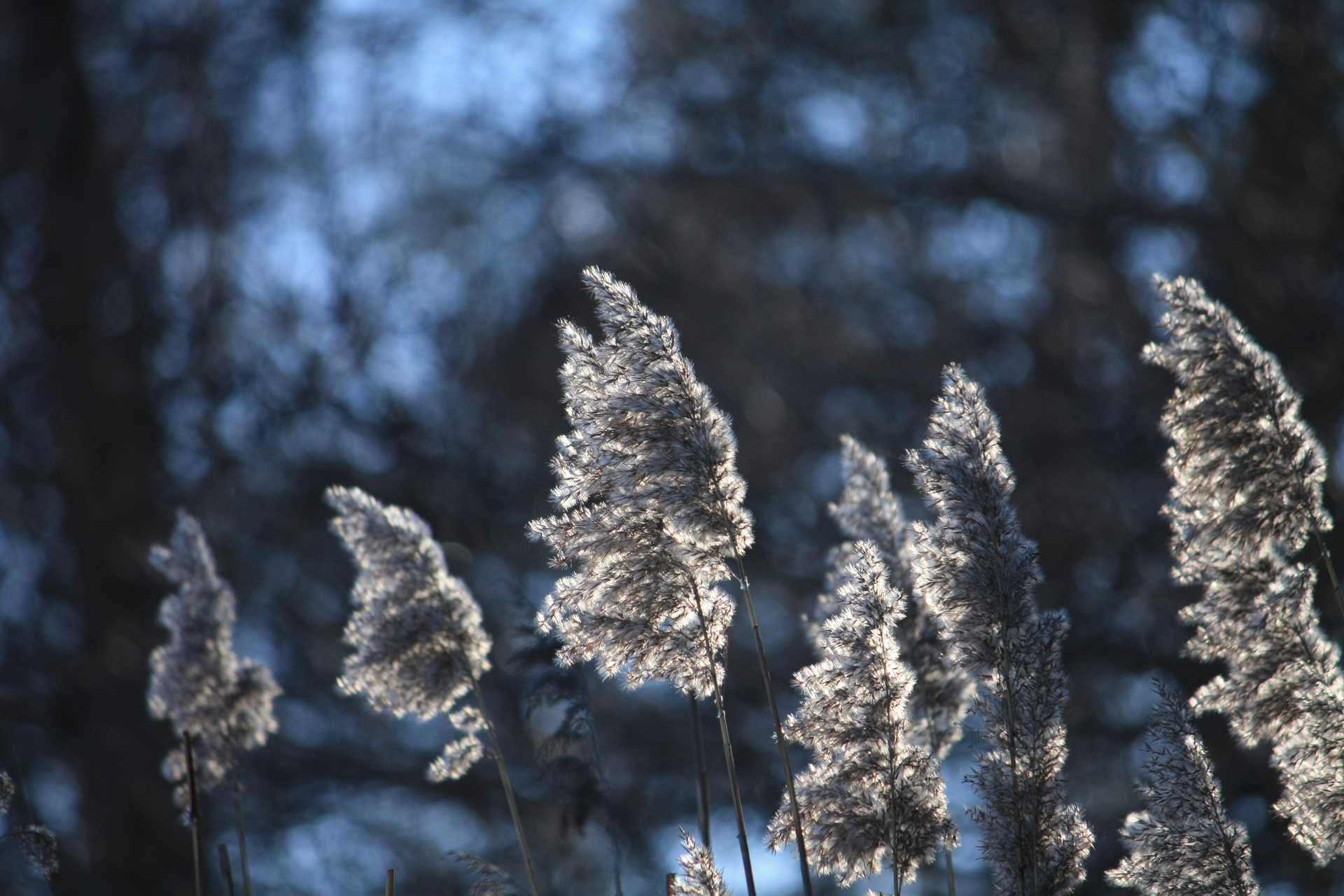 View of plants blowing in the wind