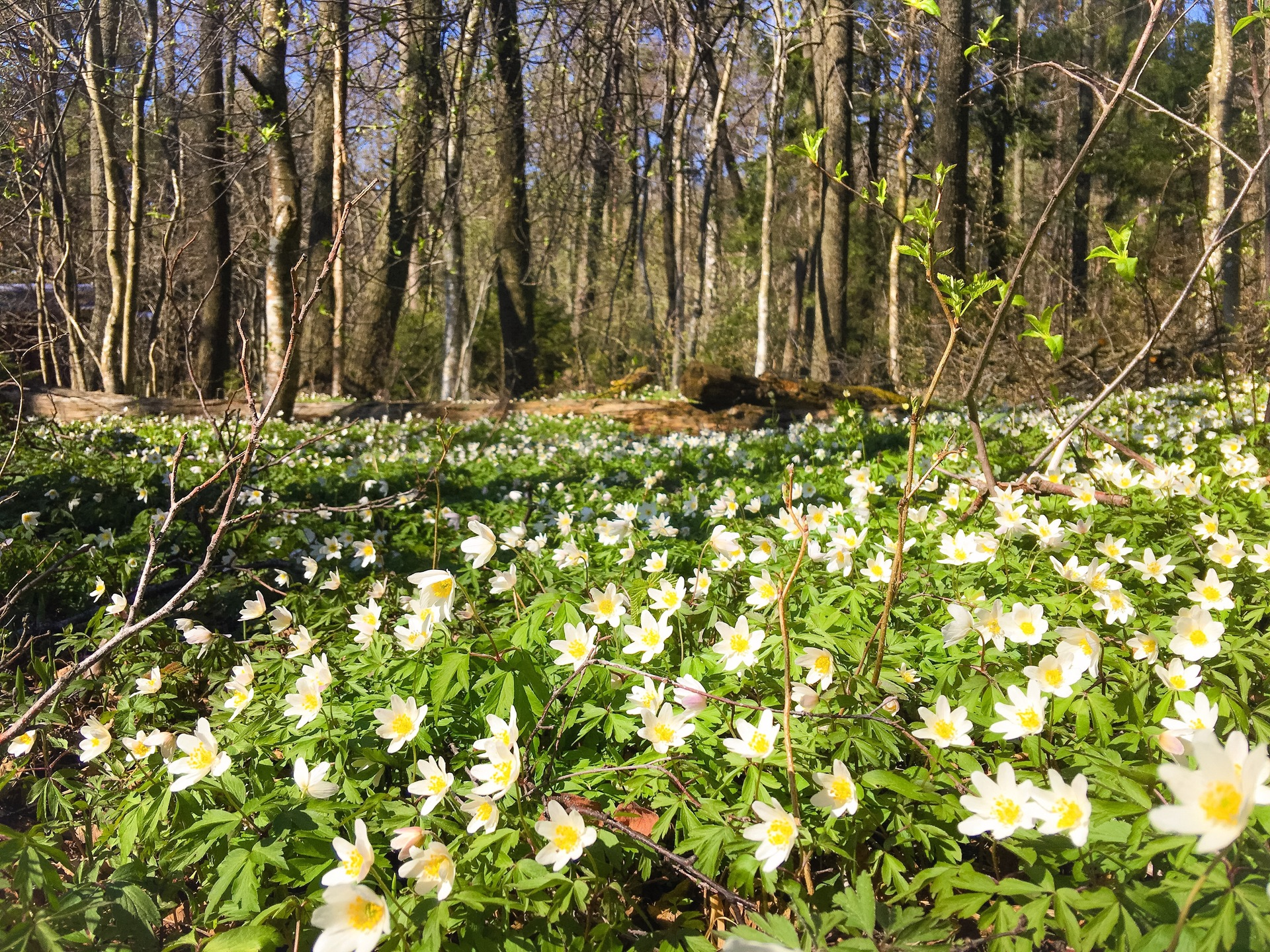 Flowers in forest   photography, color image, outdoors, day