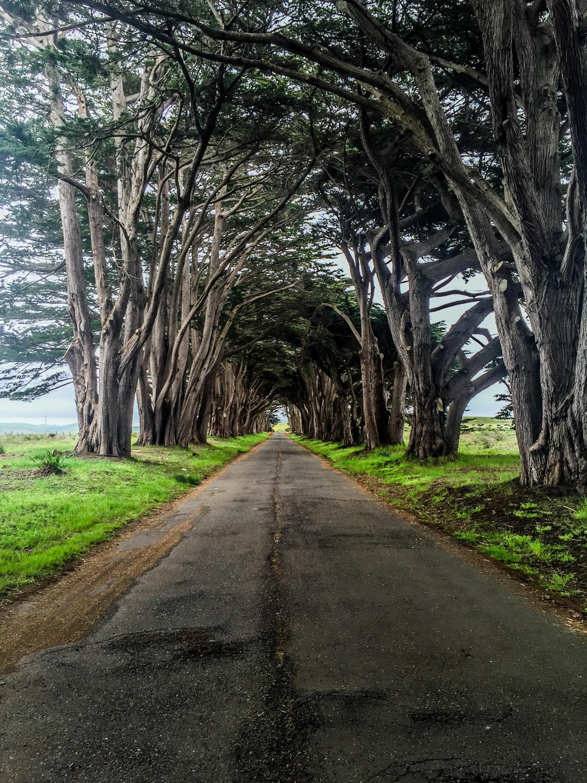 Cypress Tree Tunnel  | walkway, tree, travel, summer