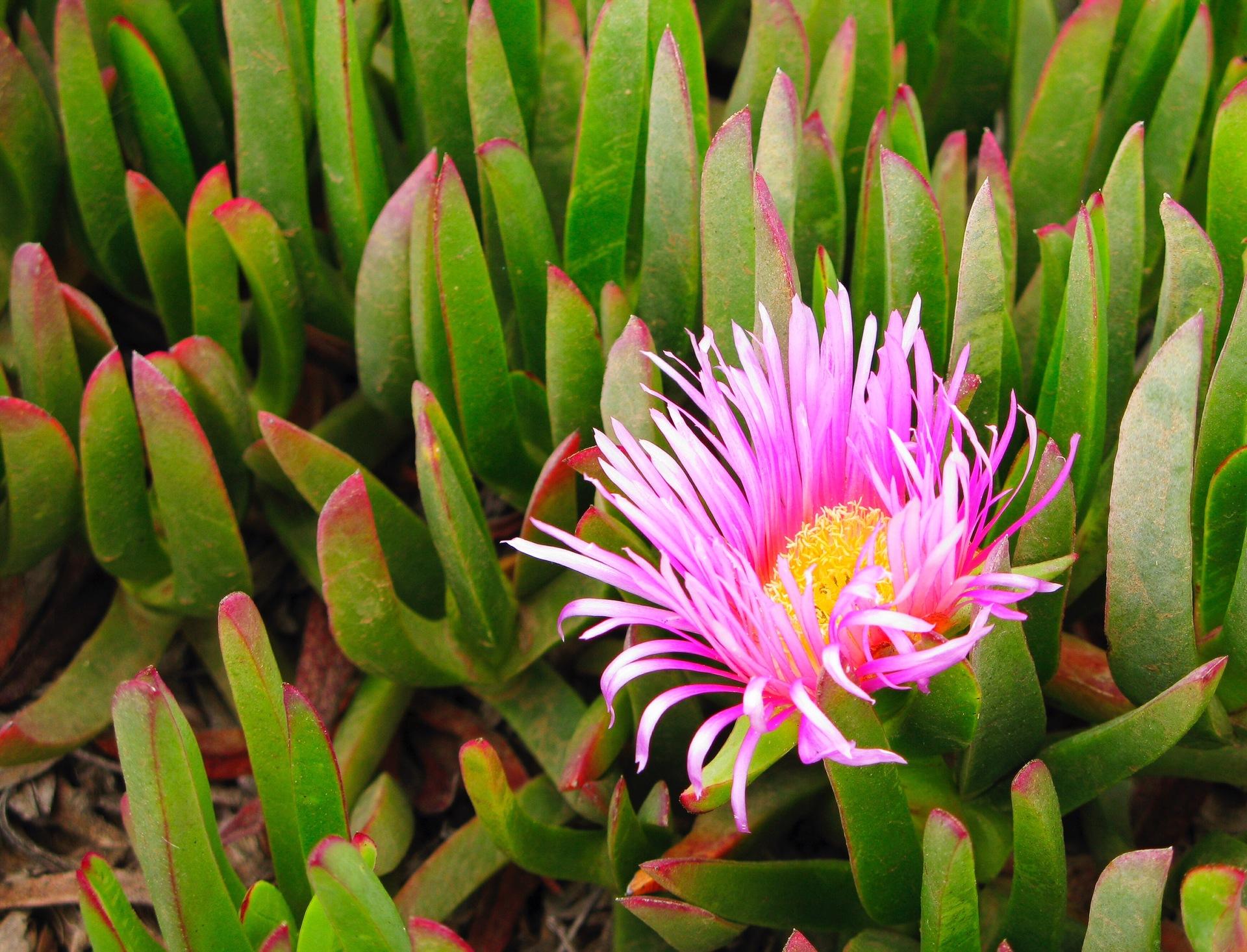 flower   garden, flora, nature, floral
