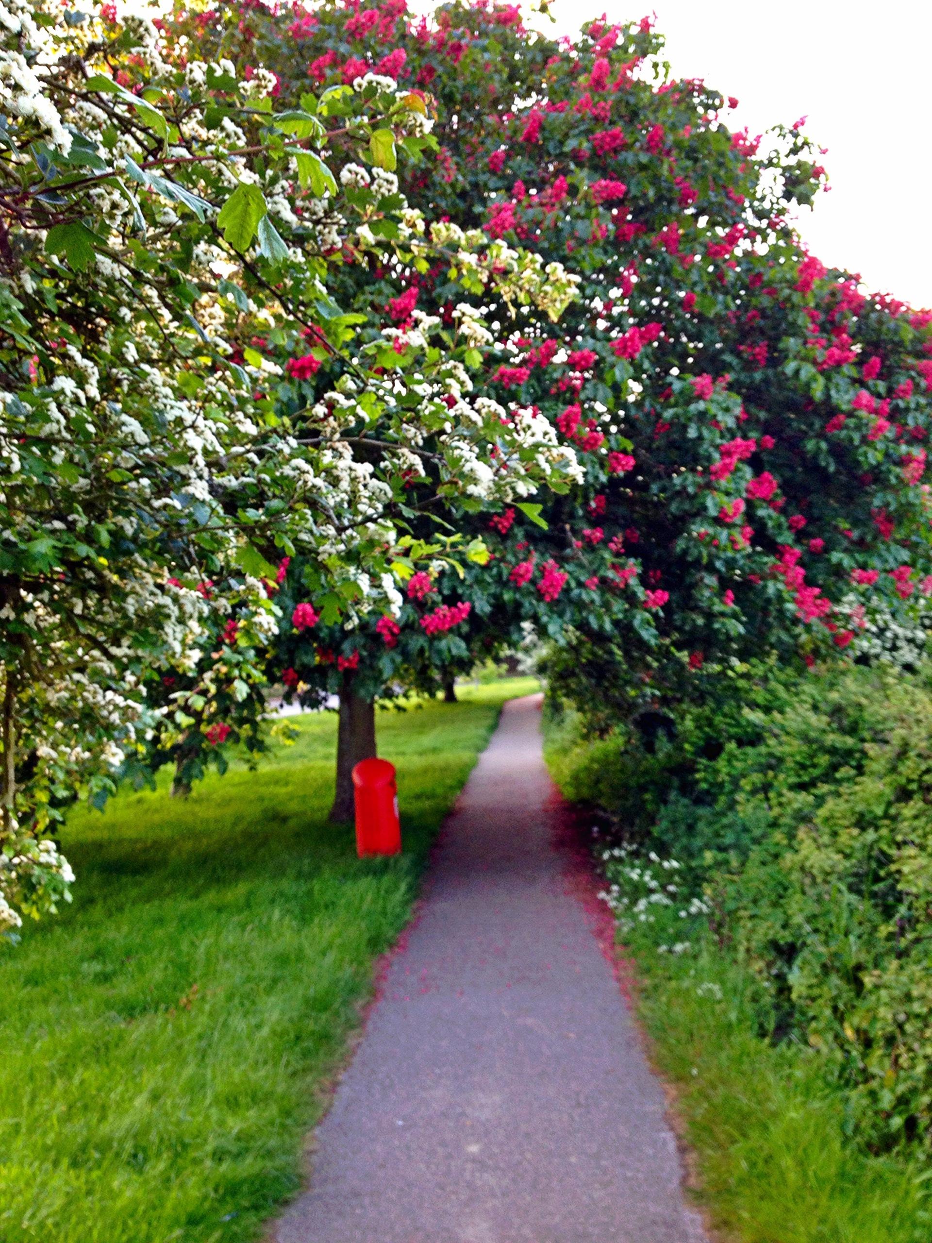 Floerings trees    flowers, nature, footpath, plants