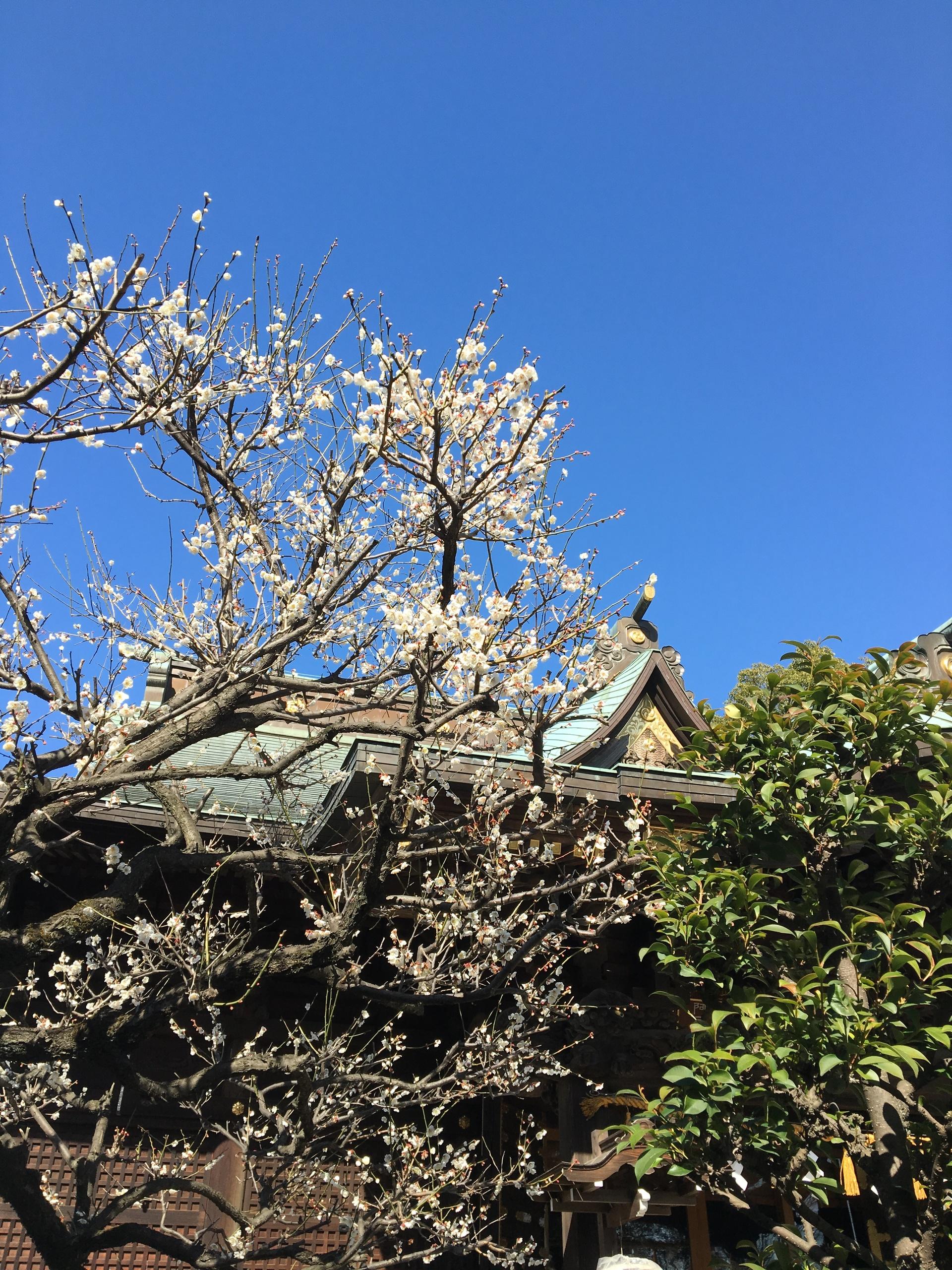 looking up | gato.gordi, architecture, building, flower