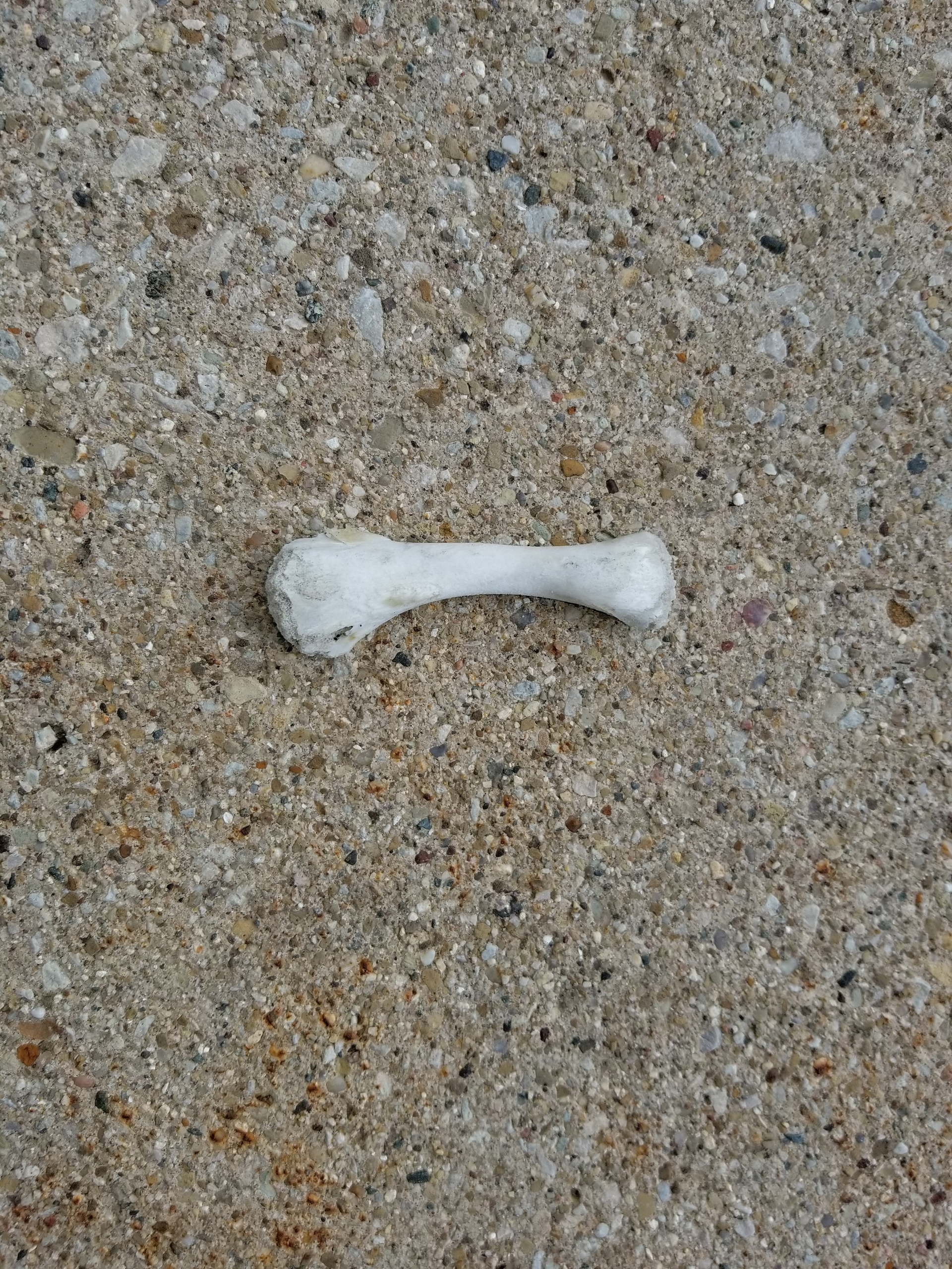 Bone on ground | codenamesailorearth, close-up, nature, no person