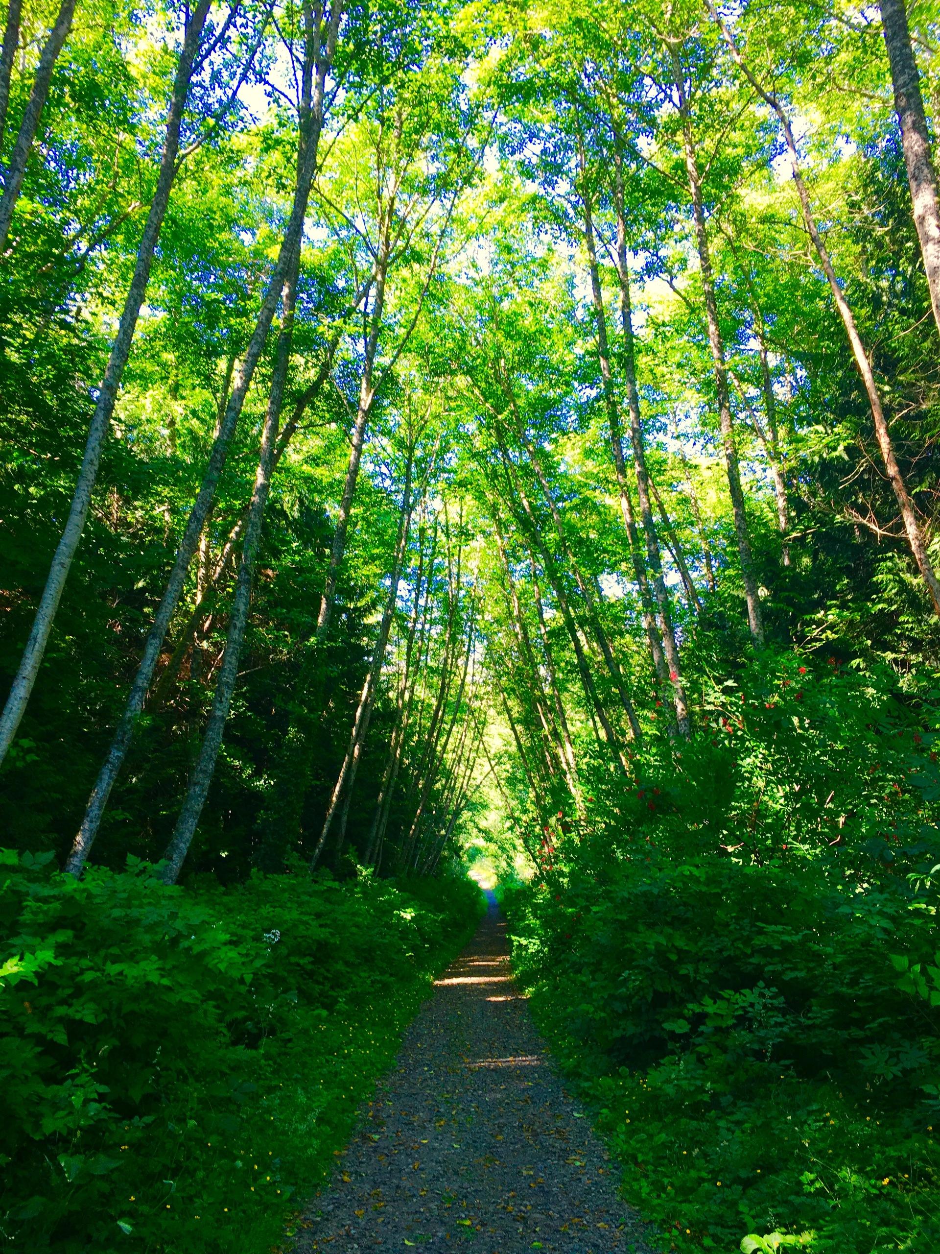Hiking Trail, Kitsap Peninsula