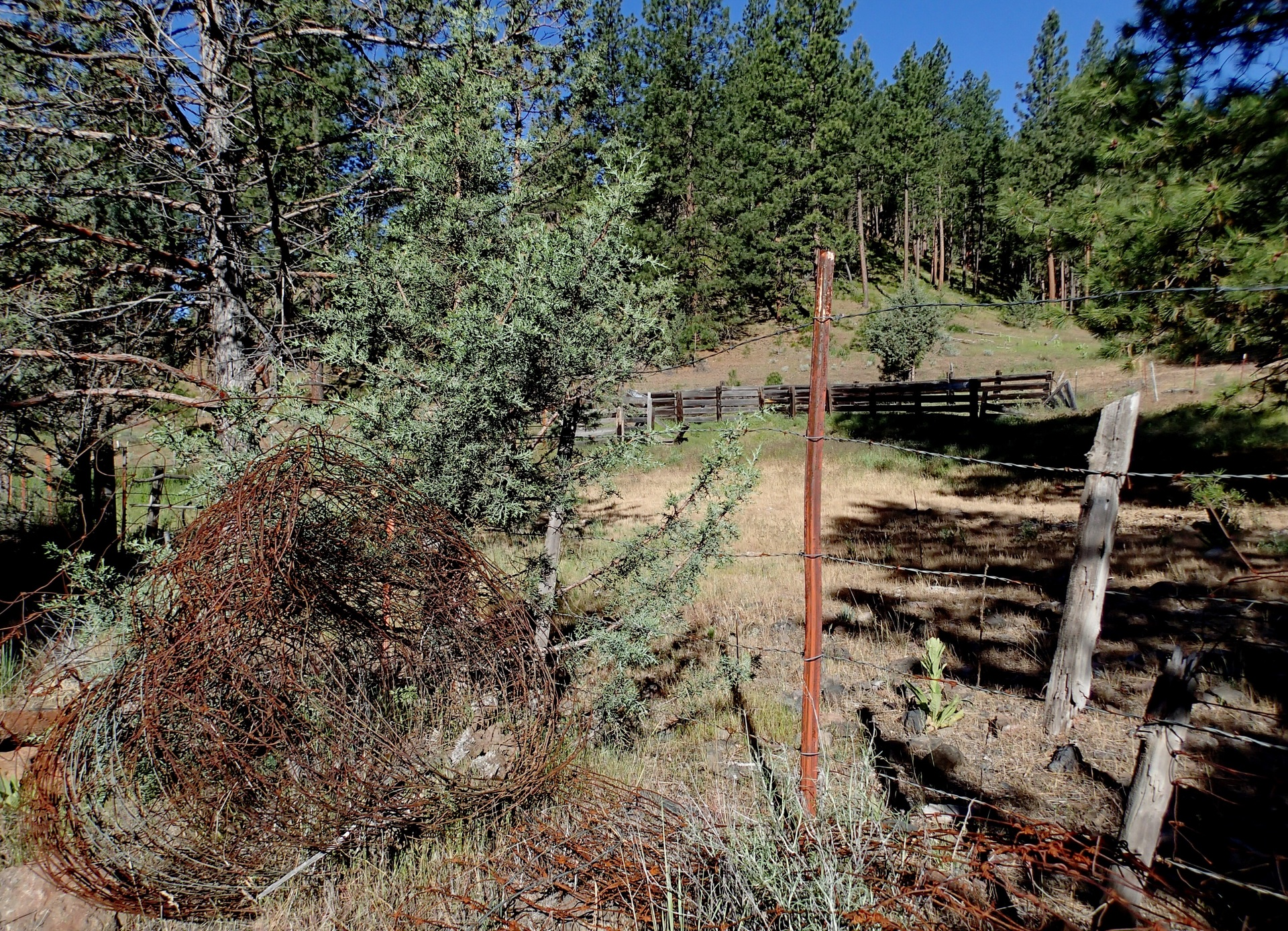 A metal post and barb wire in the foreground and wooden fence in the background on a tree covered hill on a ranch in the forests of Central Oregon on a summer day.