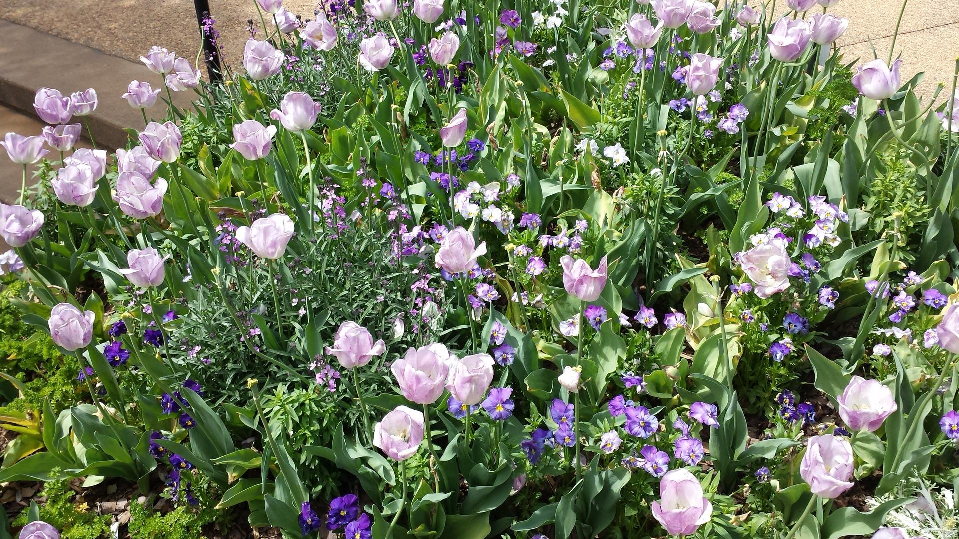 Flower, Flora, Garden, Nature, Blooming
