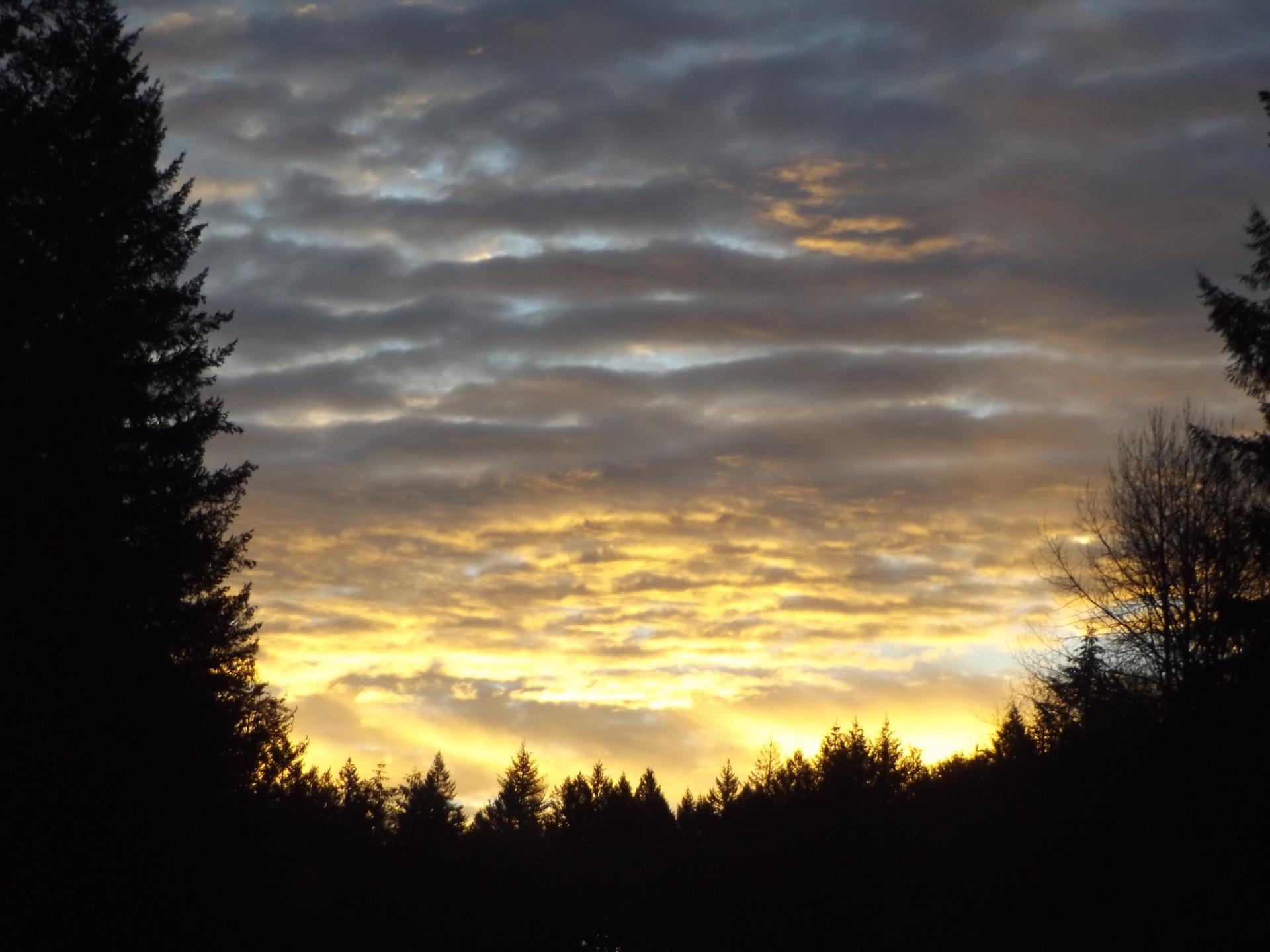 sunset | no person, dawn, tree, sun