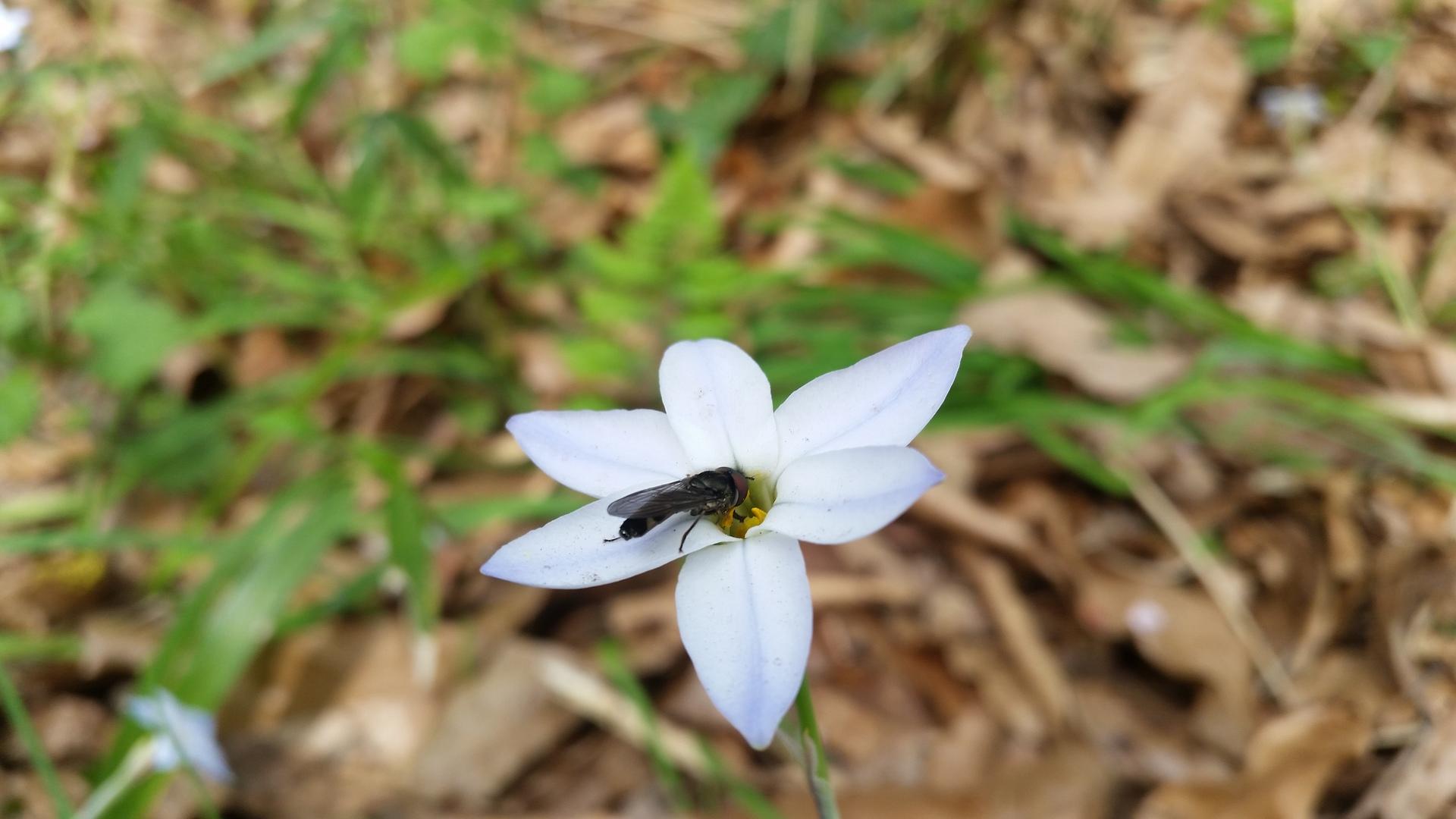Horse fly | present4_u, bright, close-up, flower