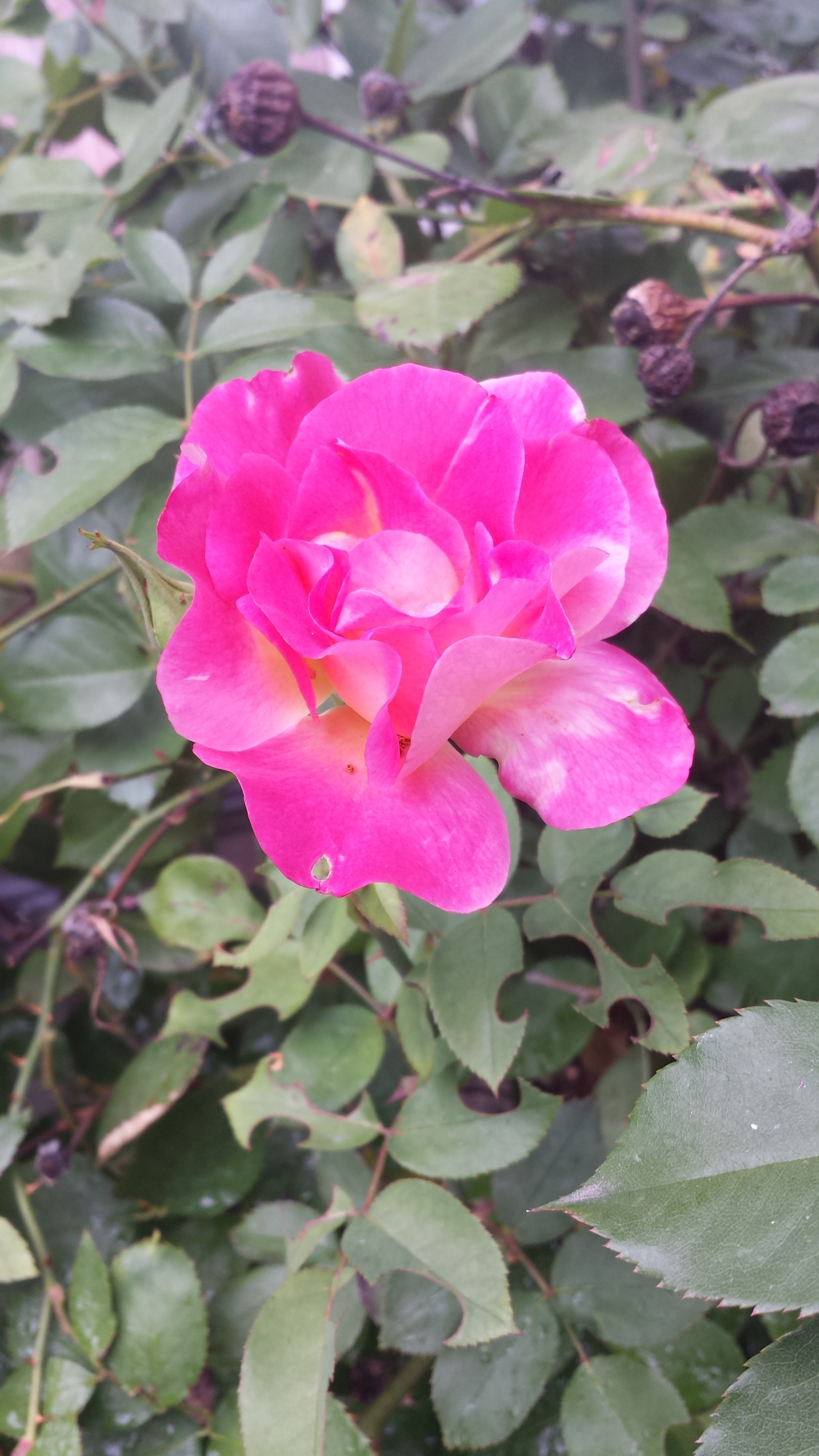 bright pink flower in the sun