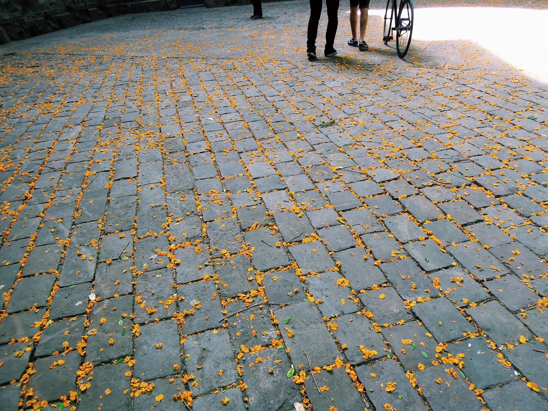 Go for a walk | gato.gordi, background, cobblestone, floor