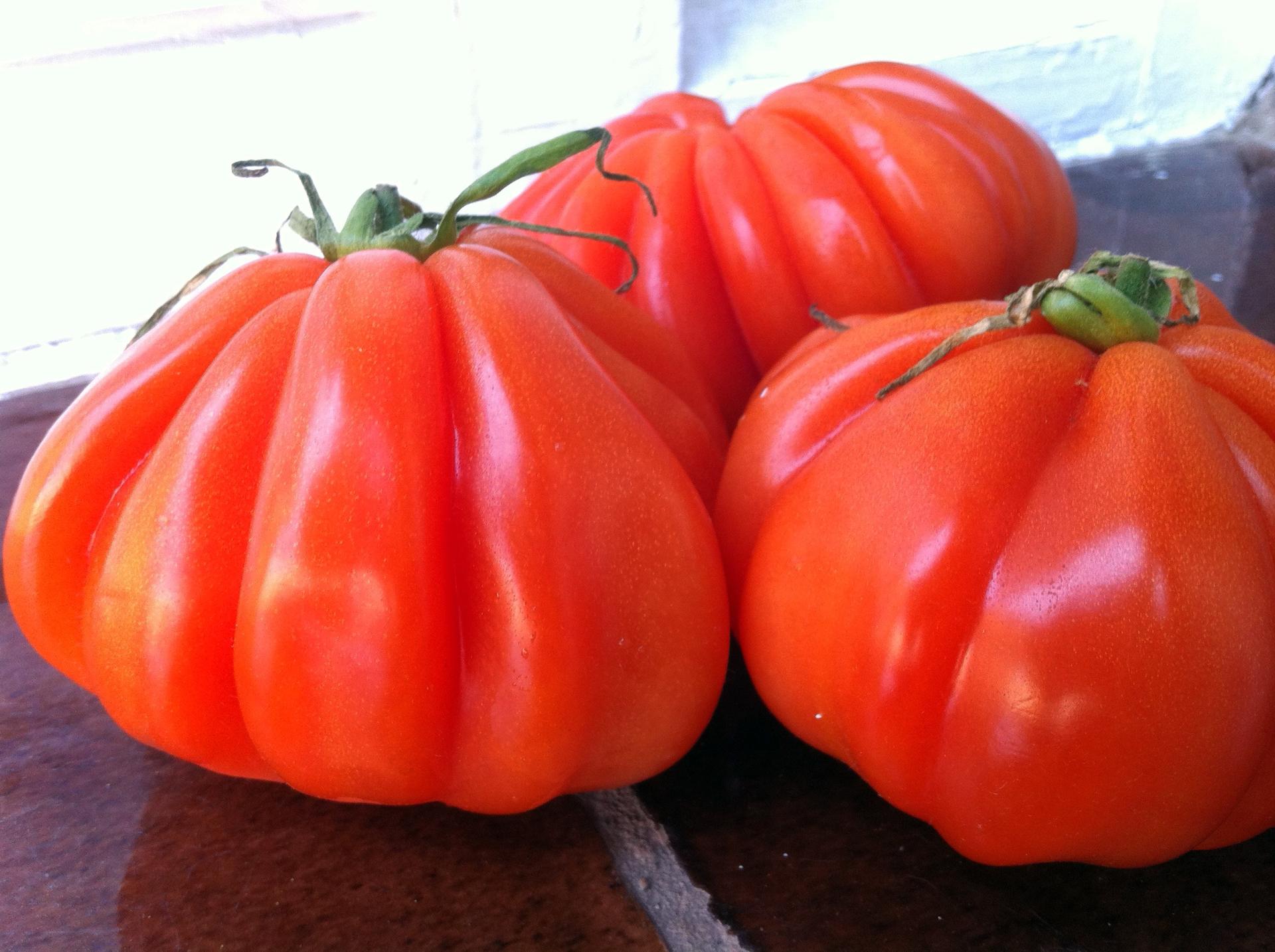 Tomatoes   gato.gordi, agriculture, antioxidant, crop