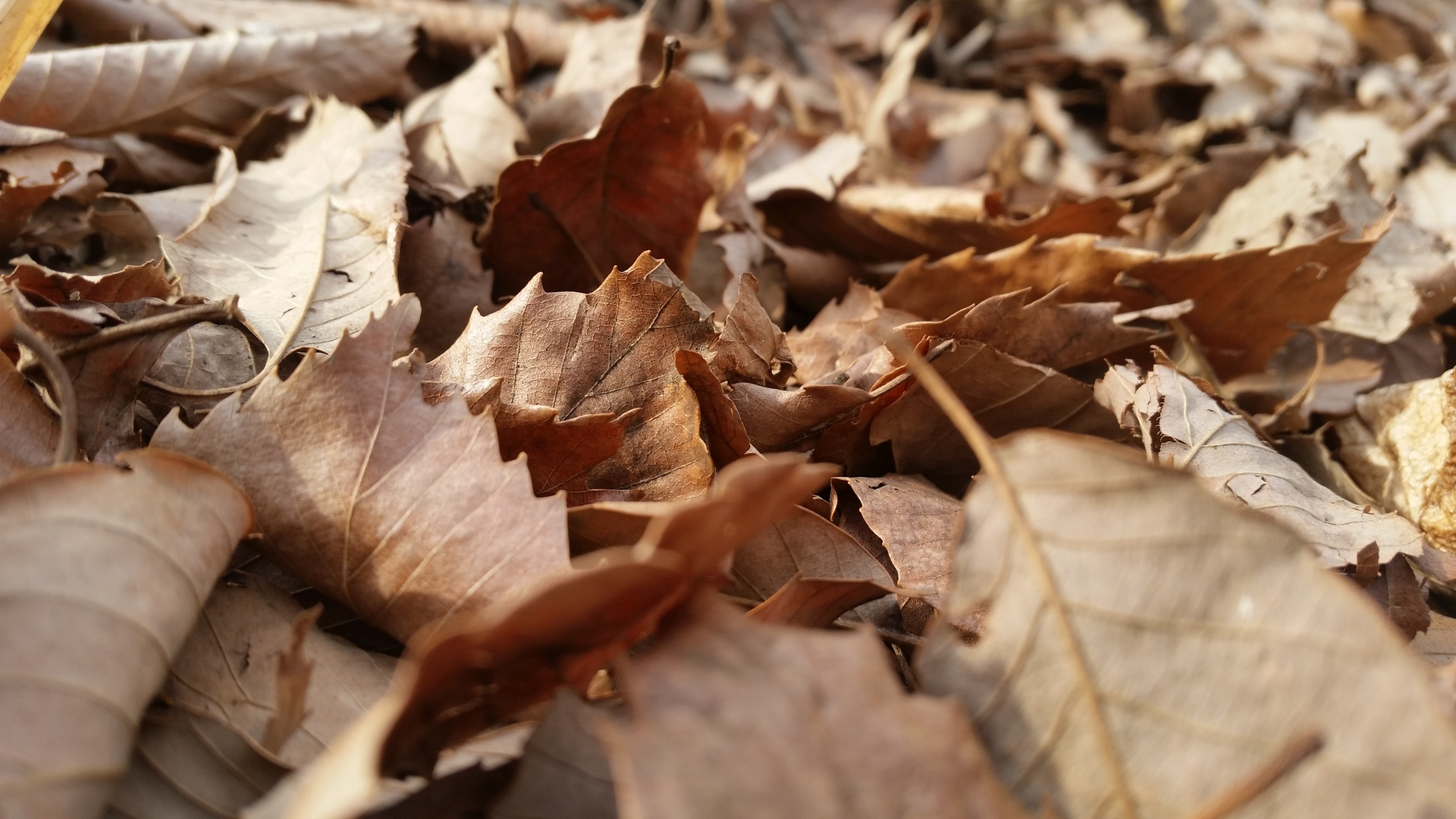 Wont to be buried fallen leaves
