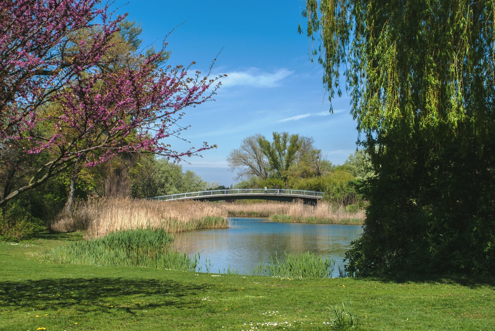 urban Paradise | howons, vienna, beautiful, meadow