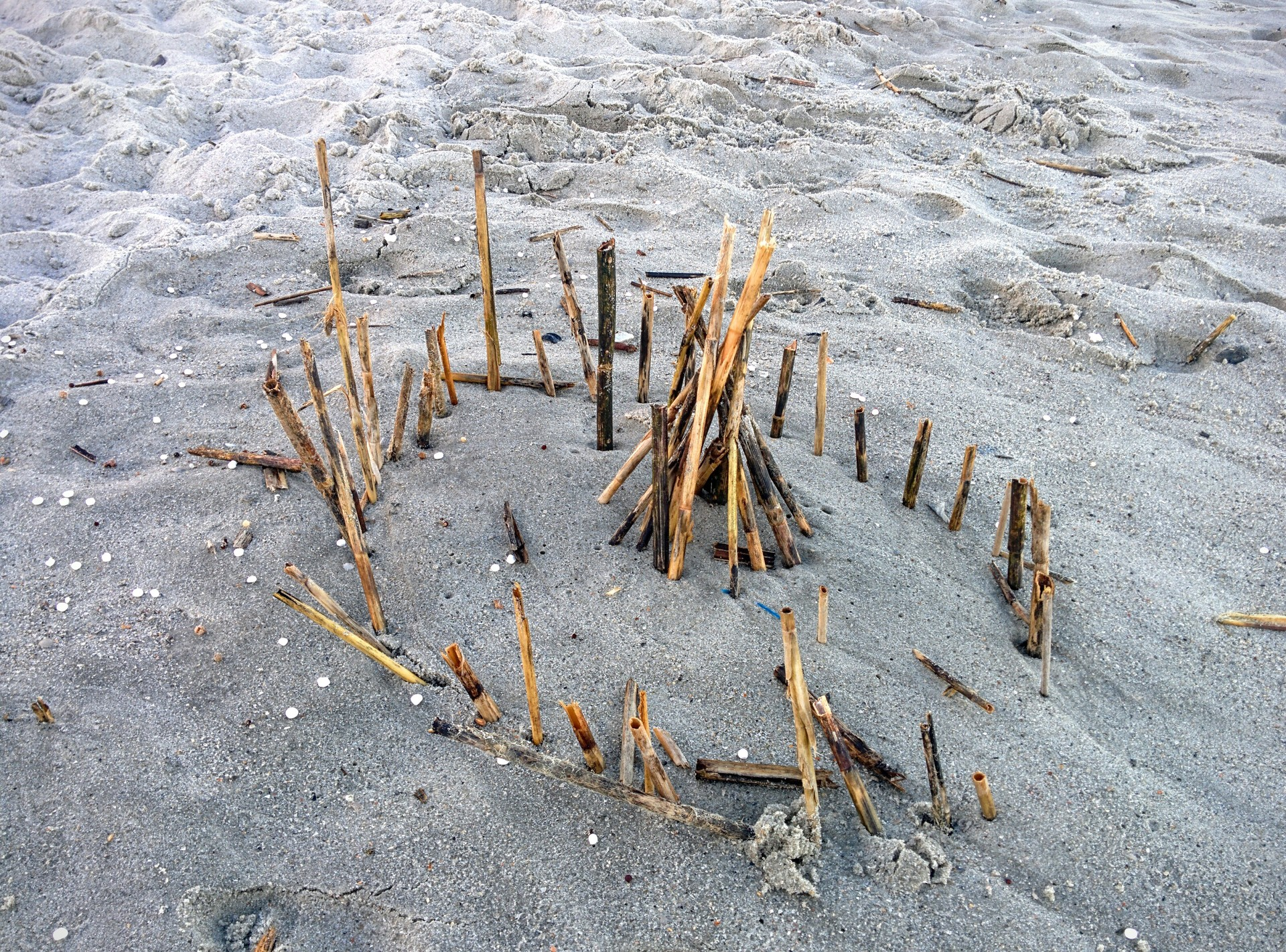 sticks in the sand. a collection of sticks my son stuck into the sabd