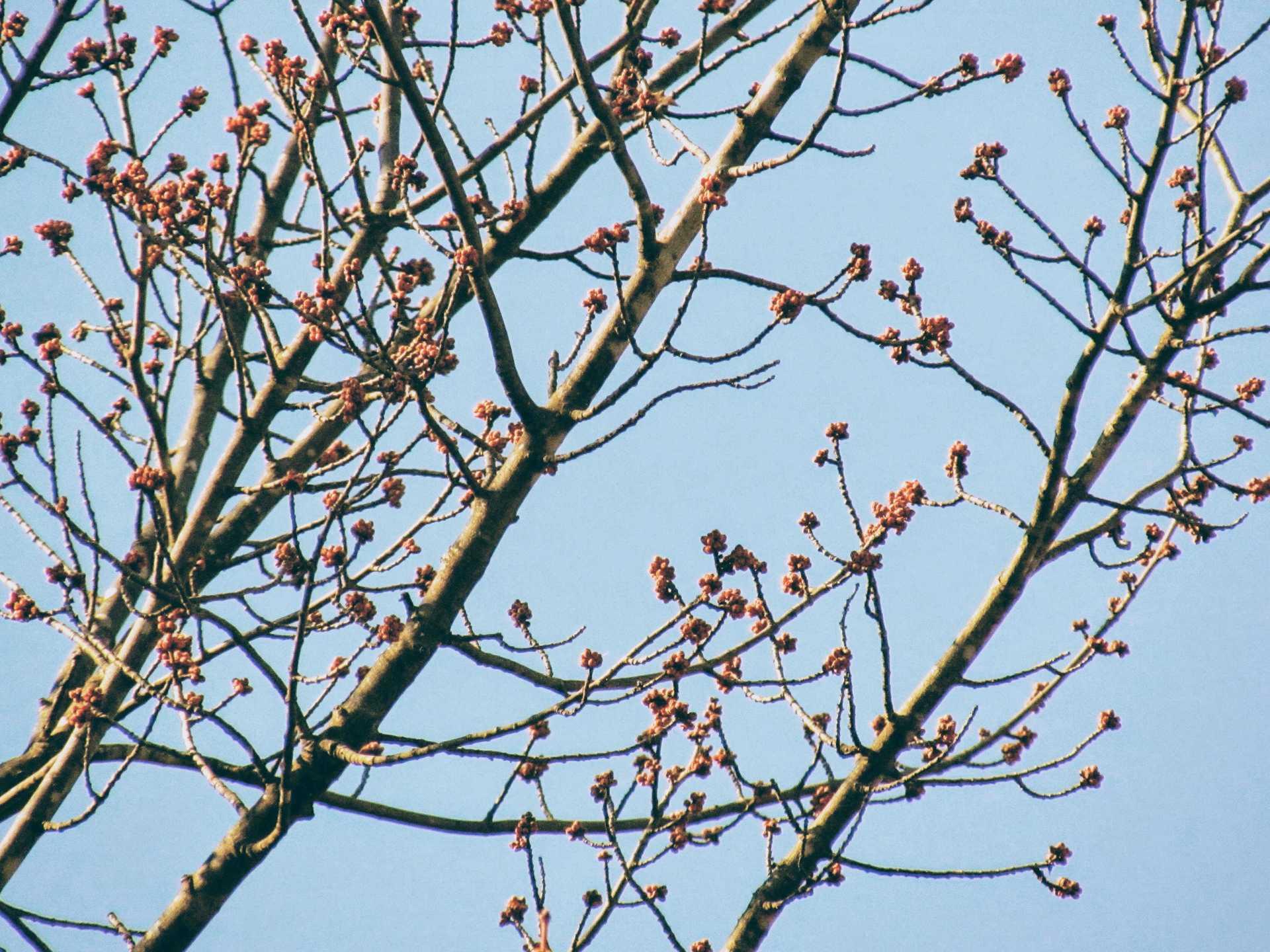 budd   natalie.sirois, blue sky, branch, leaf