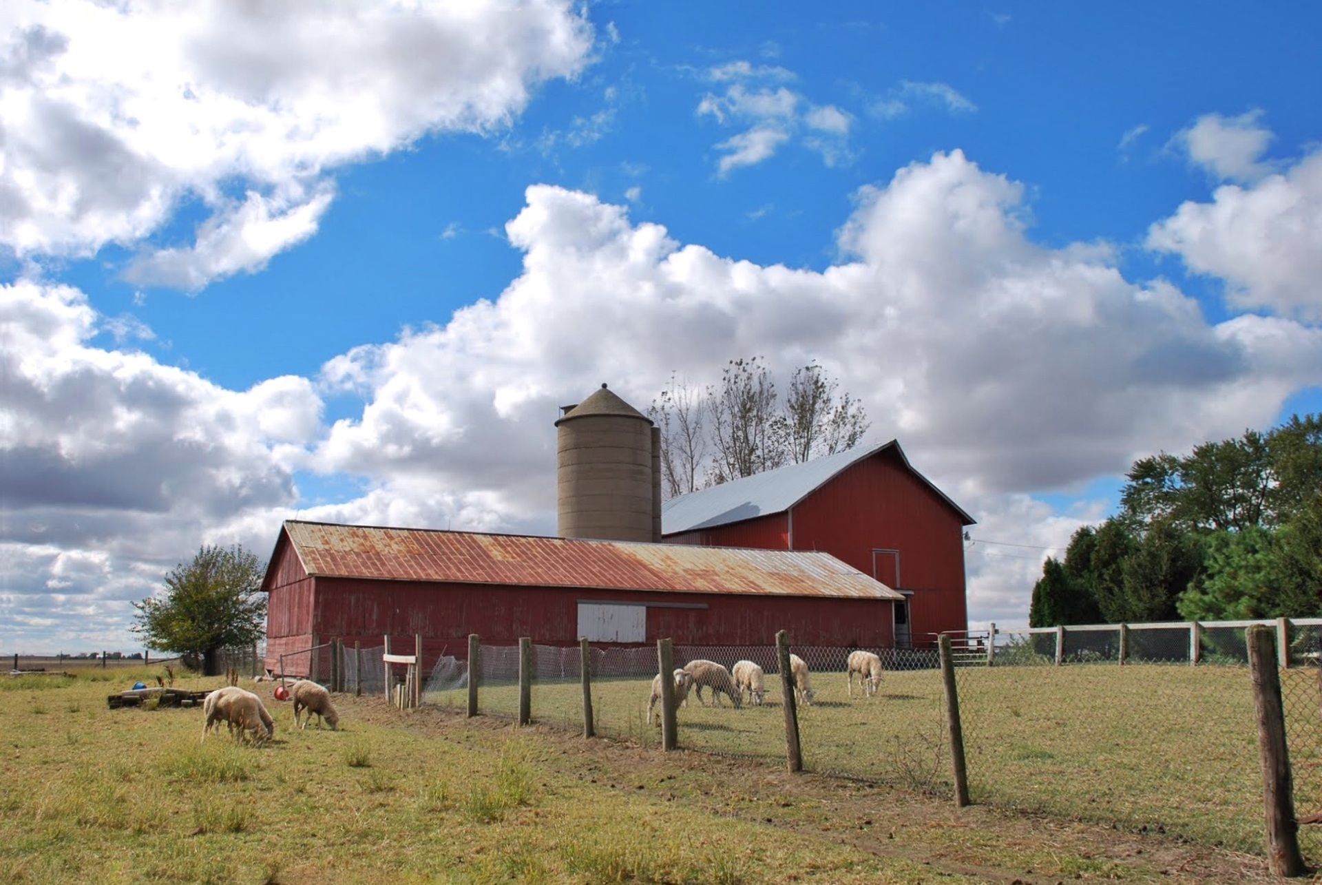 Red barn beneath blue sky. Sheep graze In a pasture beside a rustic red barn beneath a bright blue sky filled with fluffy clouds