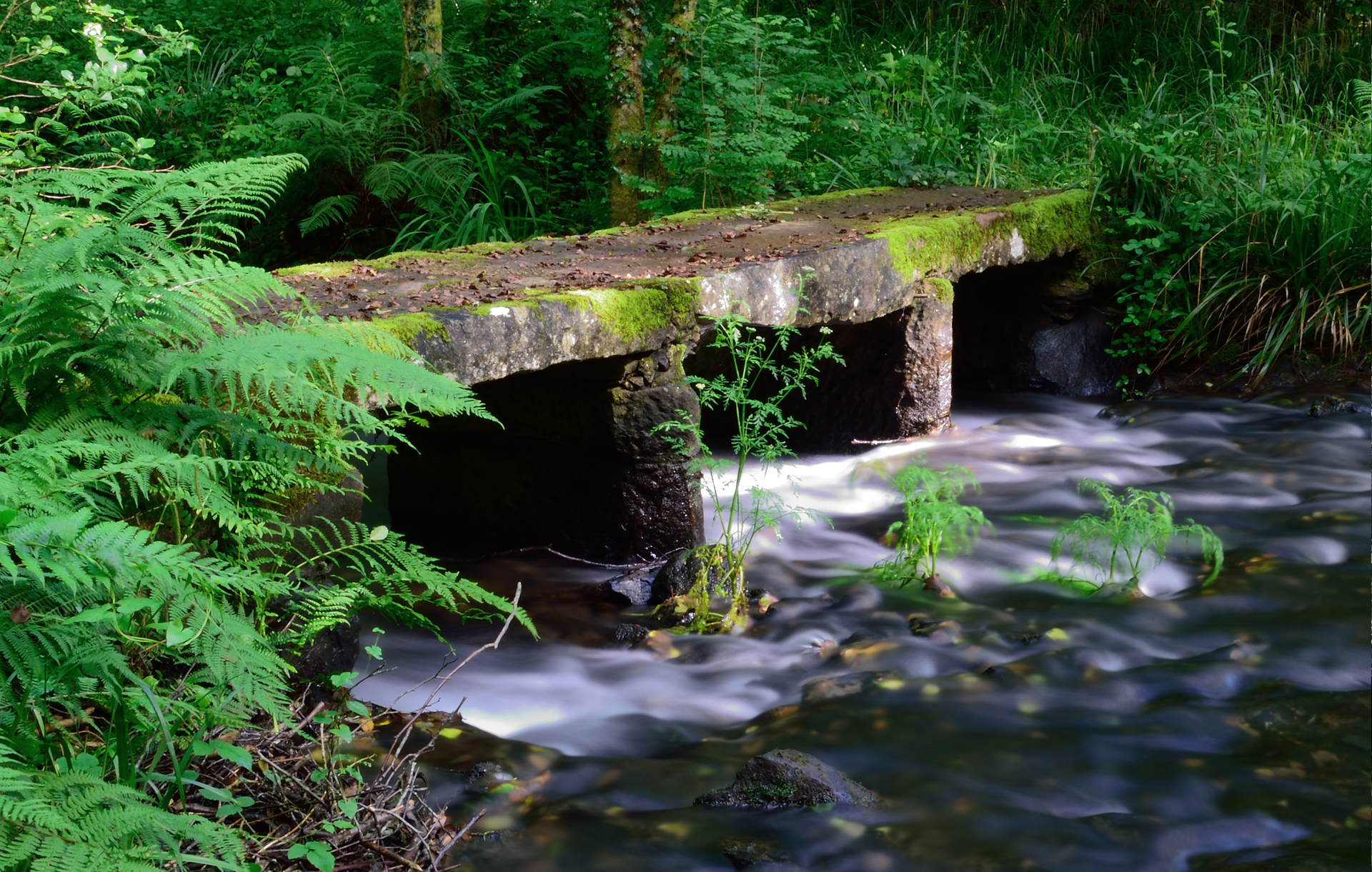 Flowing water   manusfer, fern, forest, moss