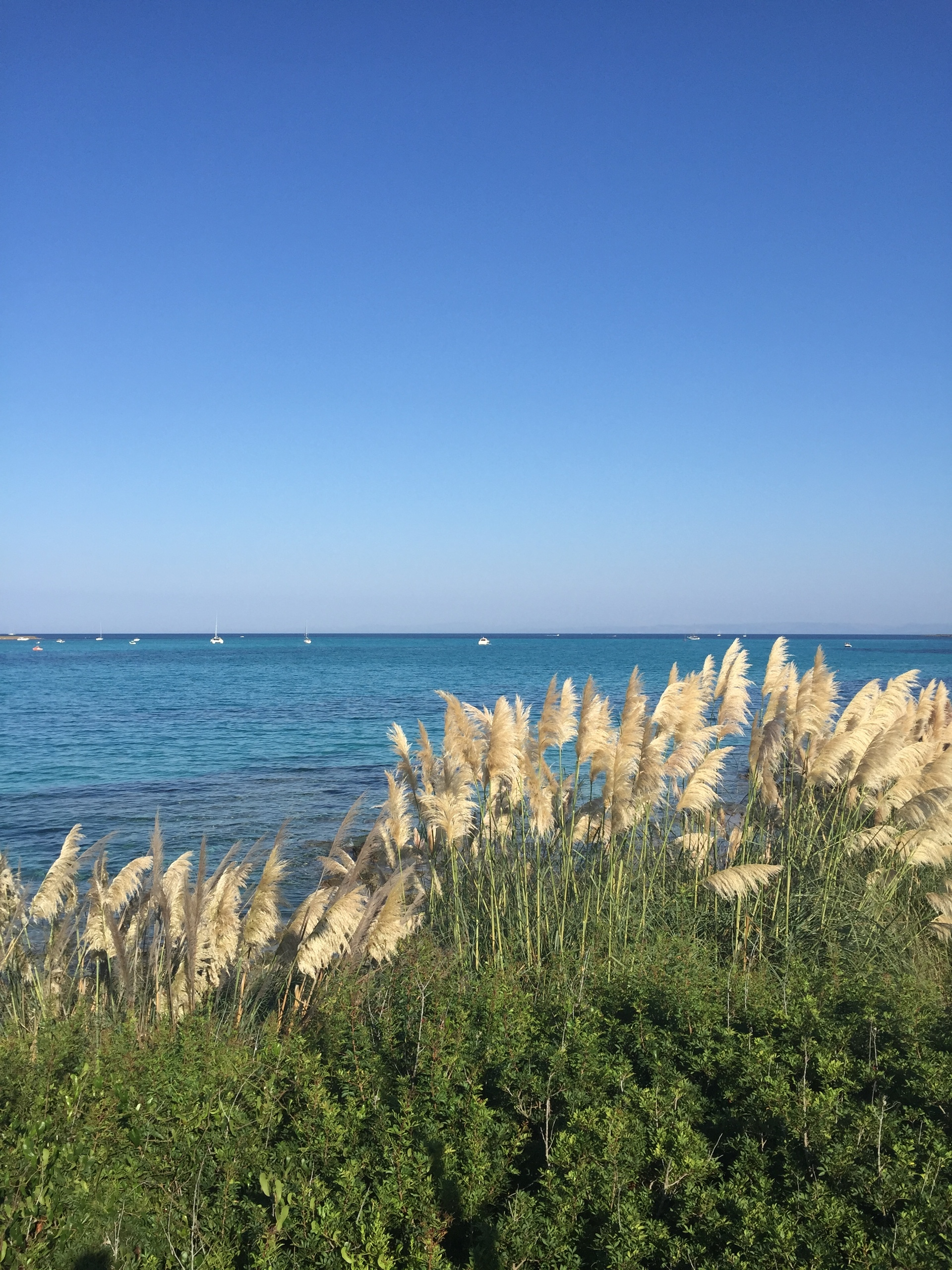 MEDITERRANEAN SEA   seamussel, no person, nature, sky