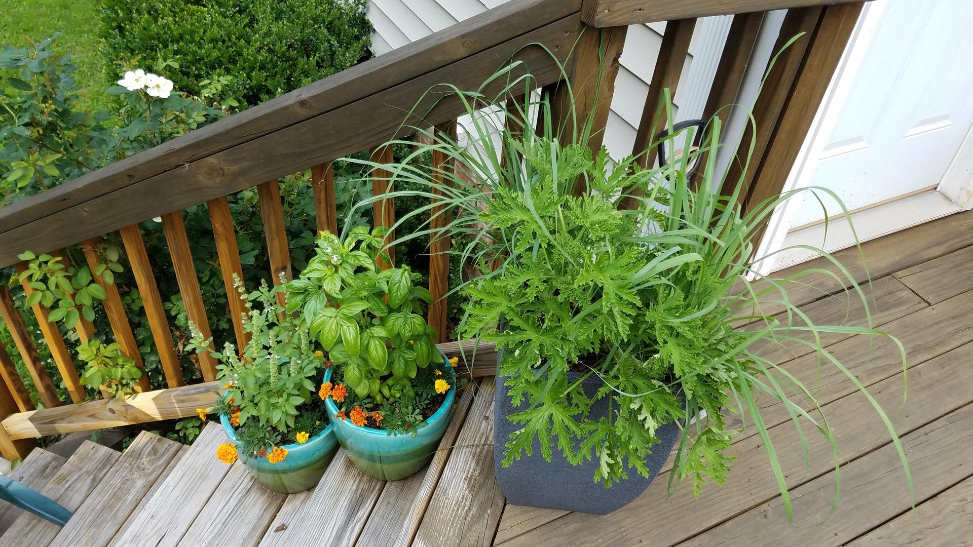 Container pot garden
