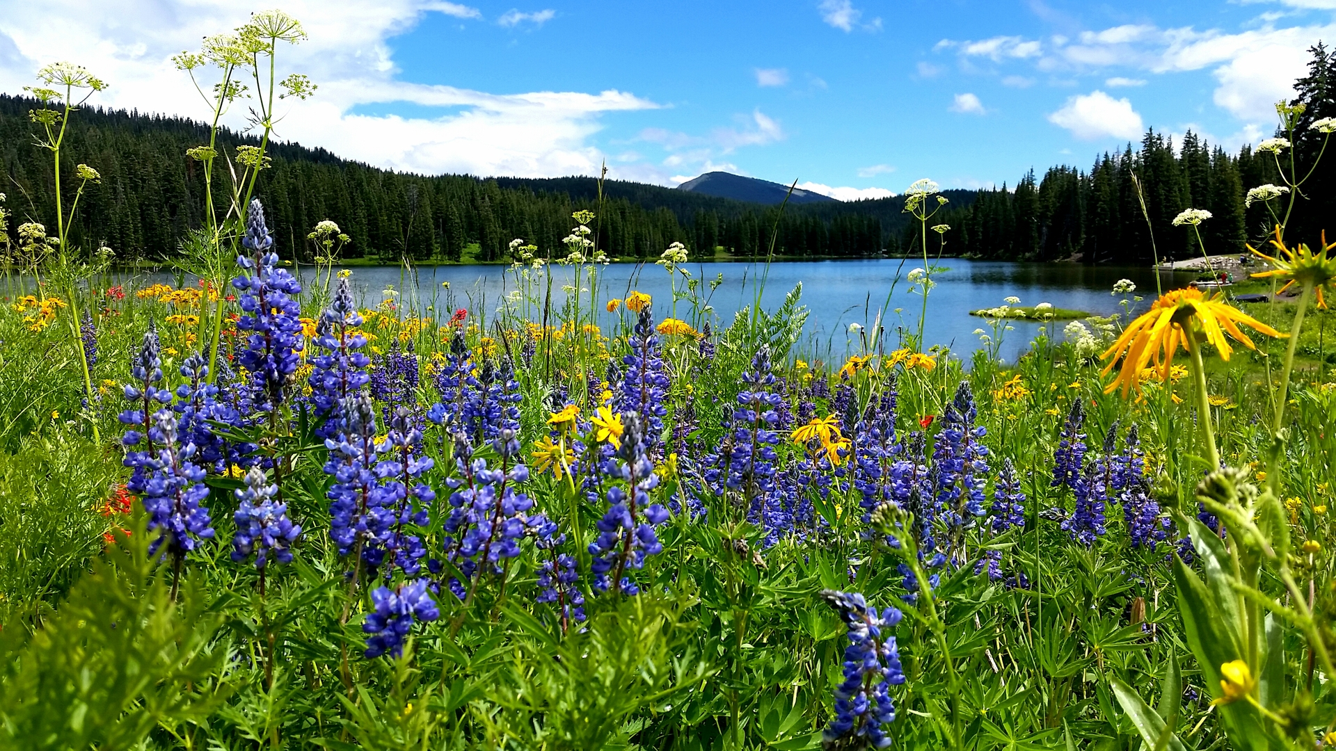 A Splendid Summer Day. At Lake Irwin in Crested Butte, Colorado.