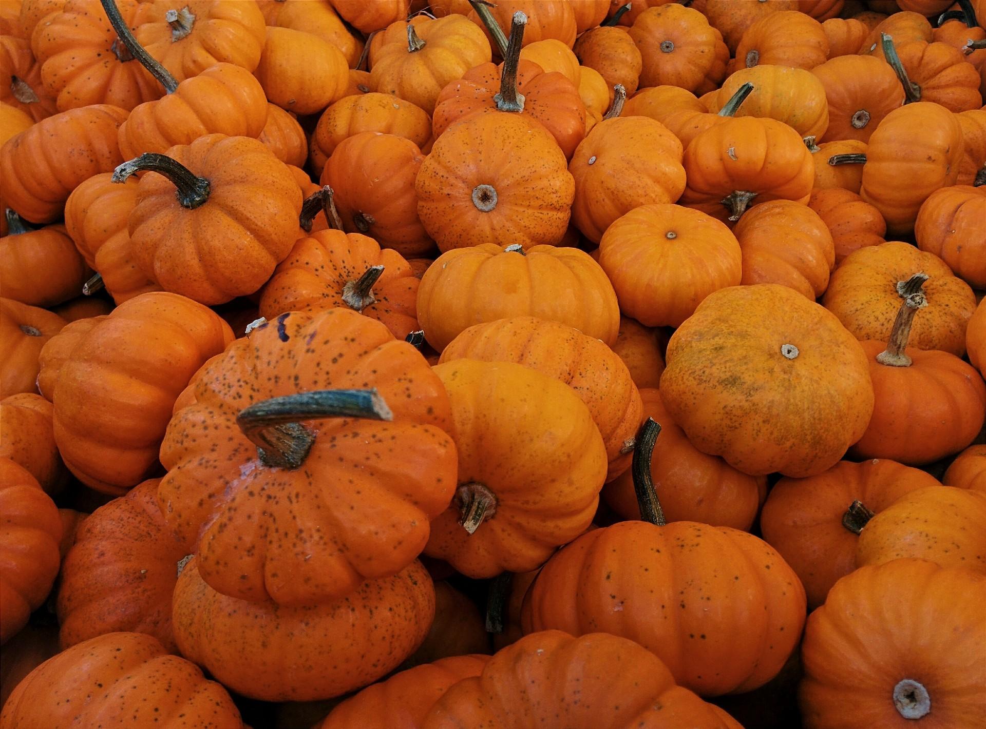 pumpkins. a lovely collection of pumpkins