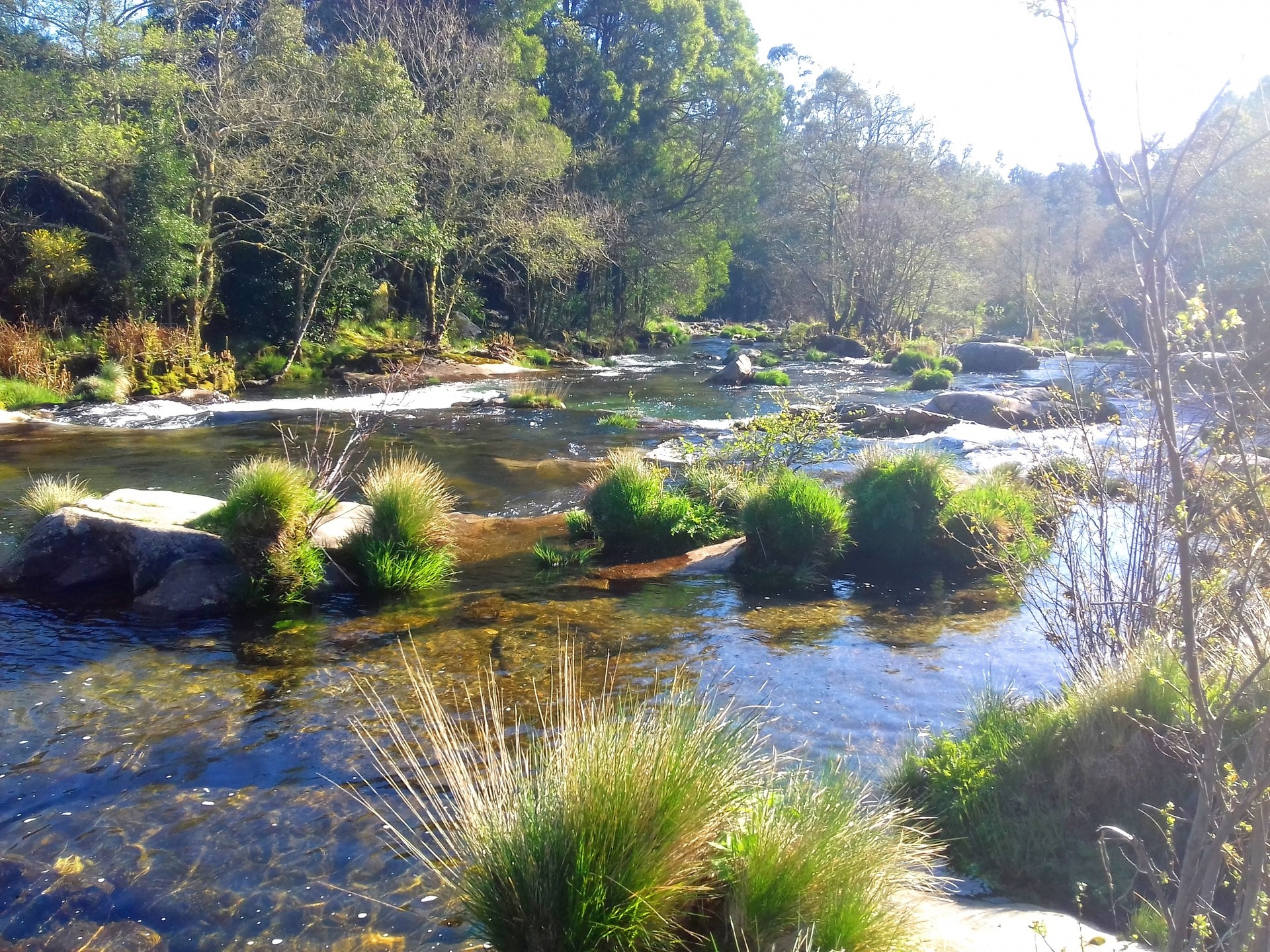 river lanscape in the woodland