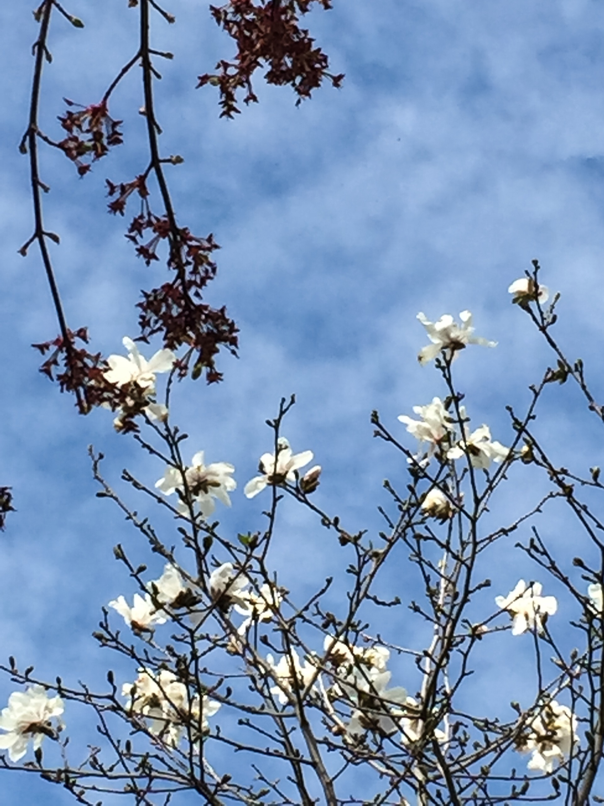 Embracing Spring Up Close | disannie, blue sky, delicate, growth
