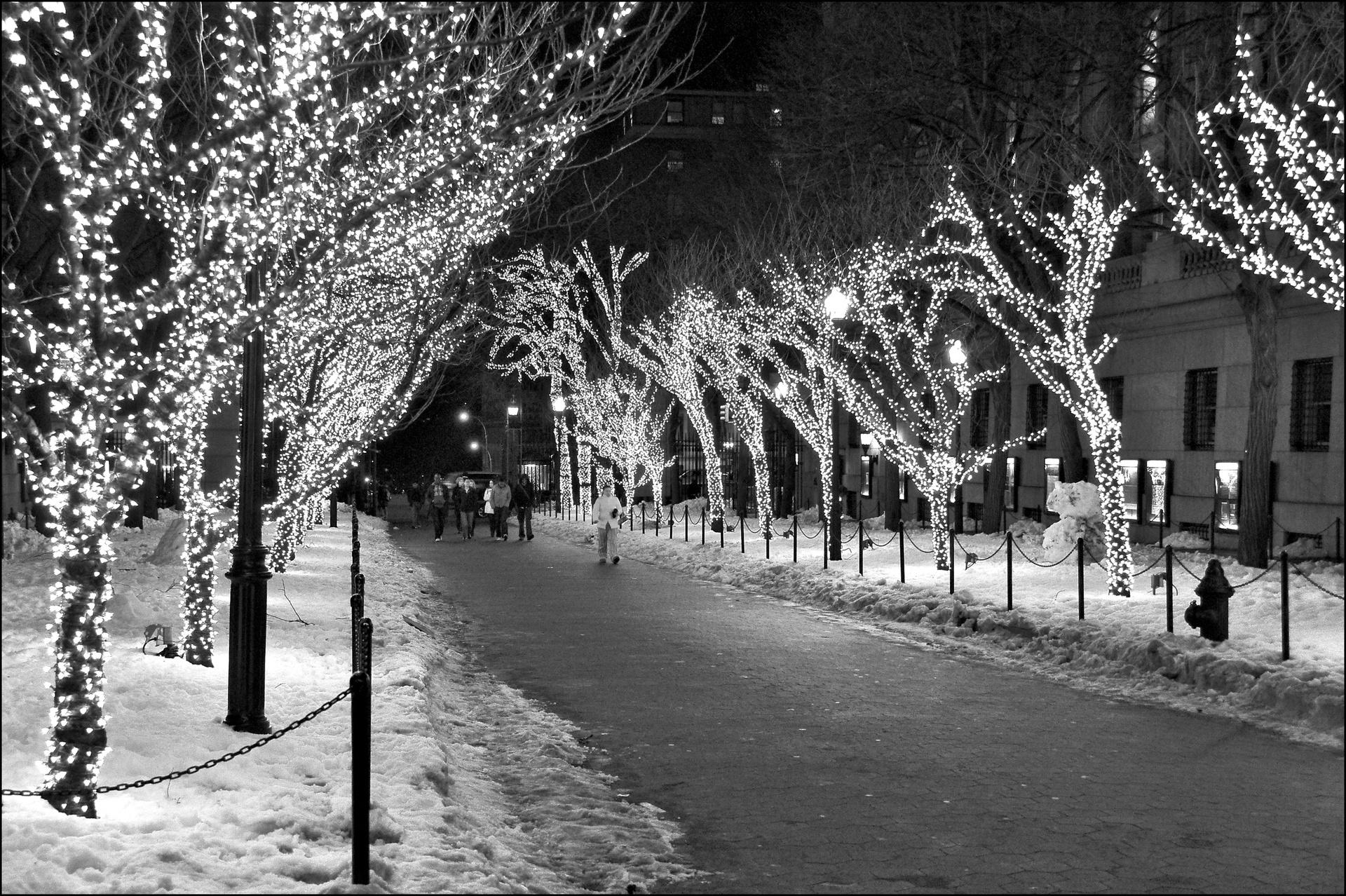 Columbia University Lights. The illuminated entrance to Columbia University at night in black and white. Campus X-mas lights Columbia University.