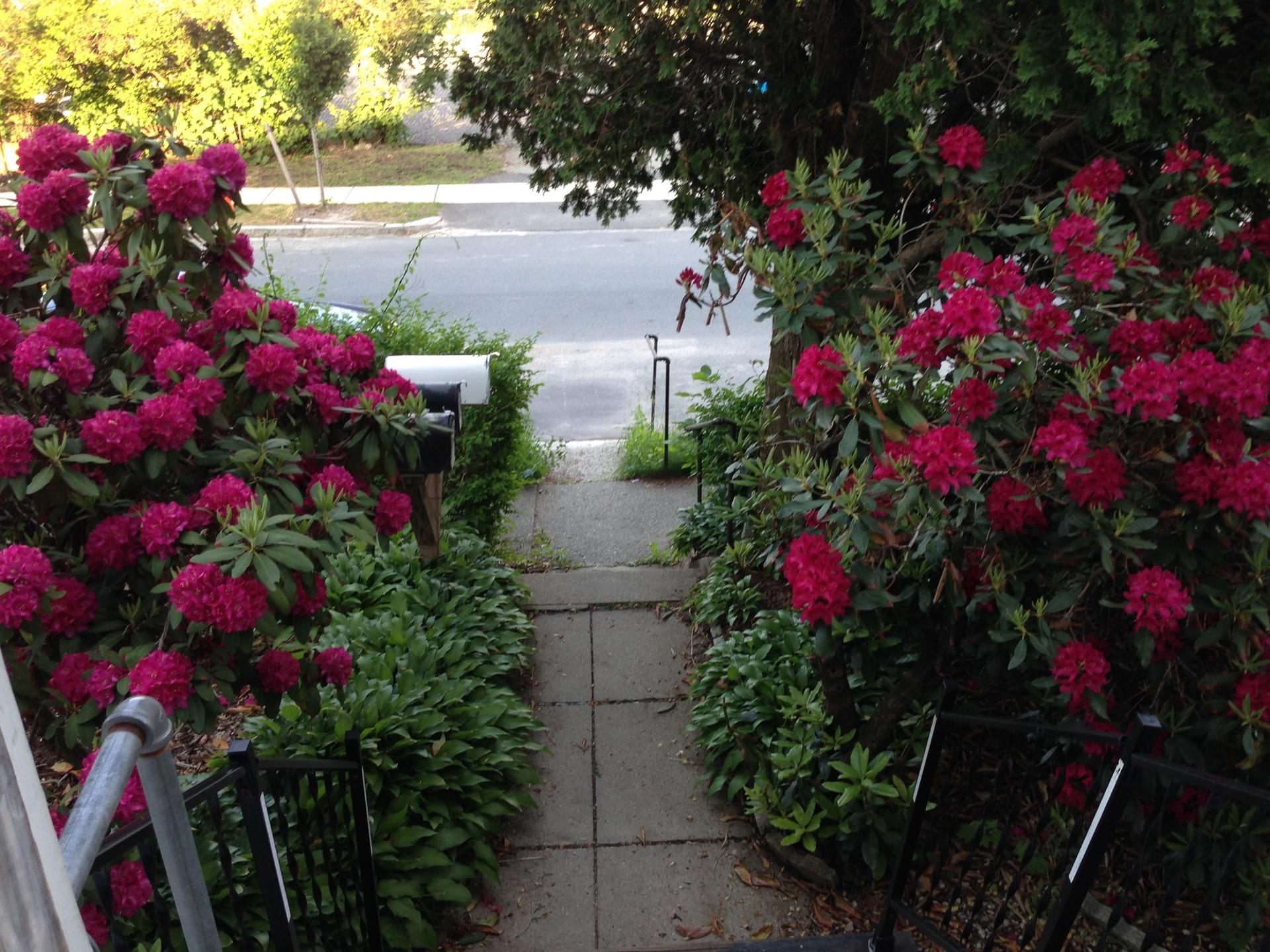 Flowery walkway   jstepien, flower, summer, horticulture