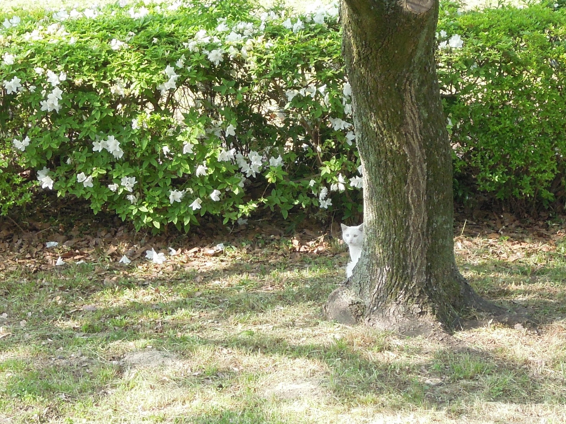Cat under the tree | gato.gordi, flower, garden, landscape