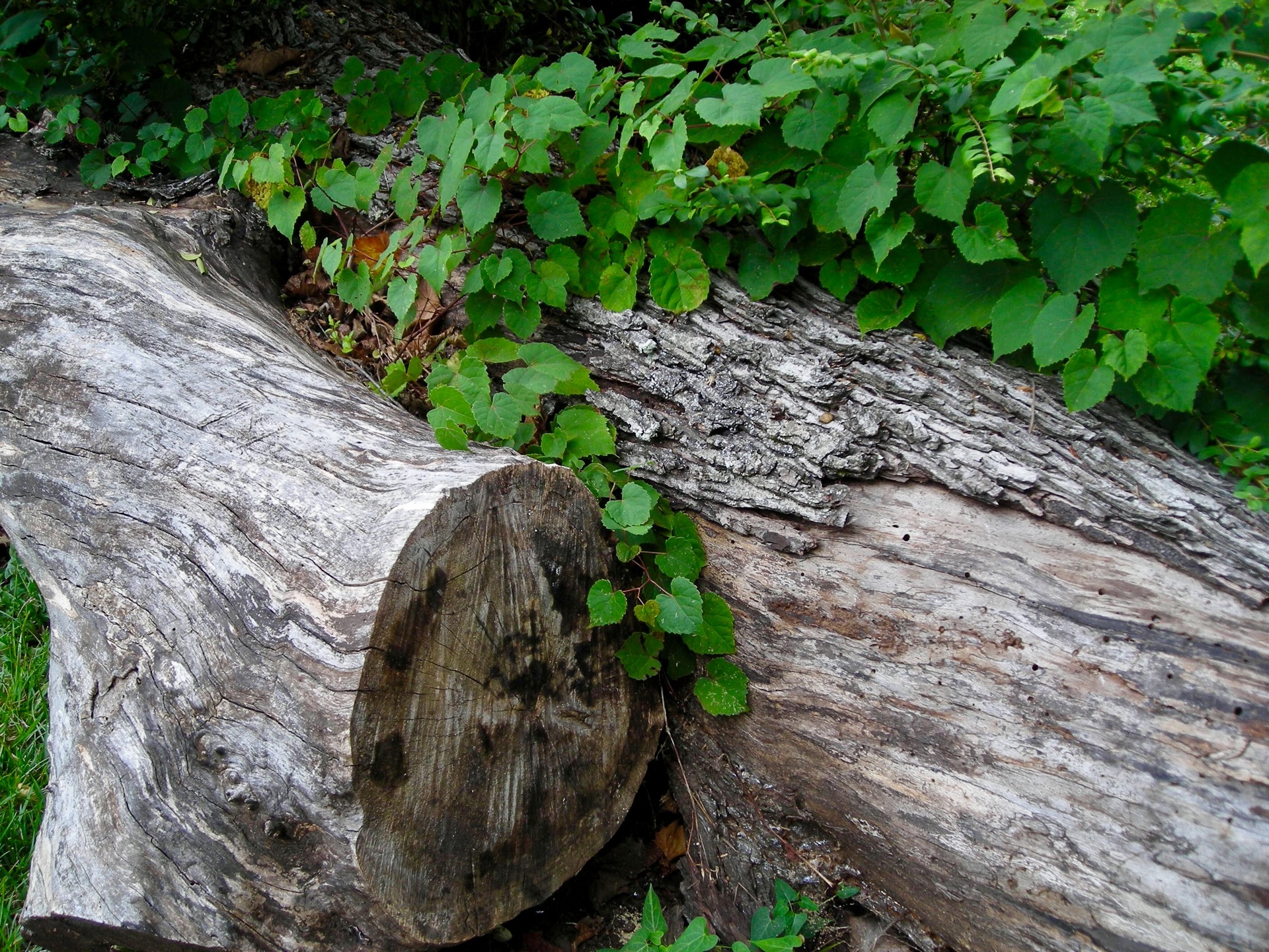 Logs Forest | desktop, wooden, landscape, summer