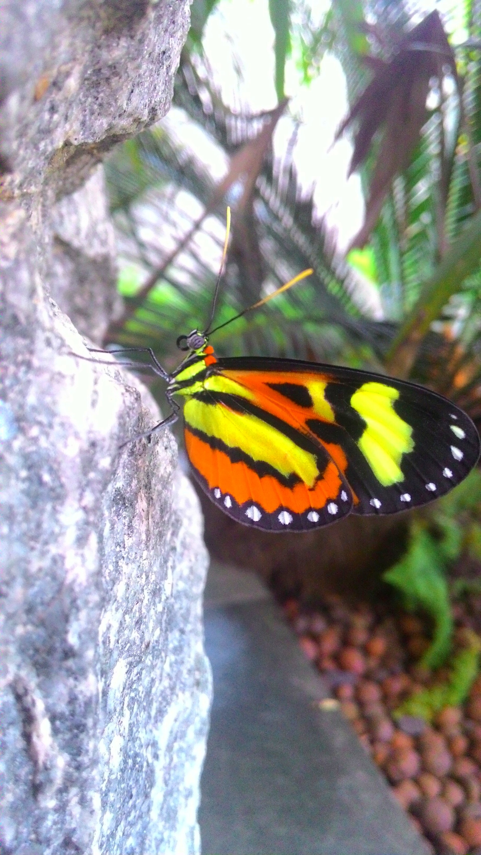 Butterfly perching on rock | nature, insect, photography, color image