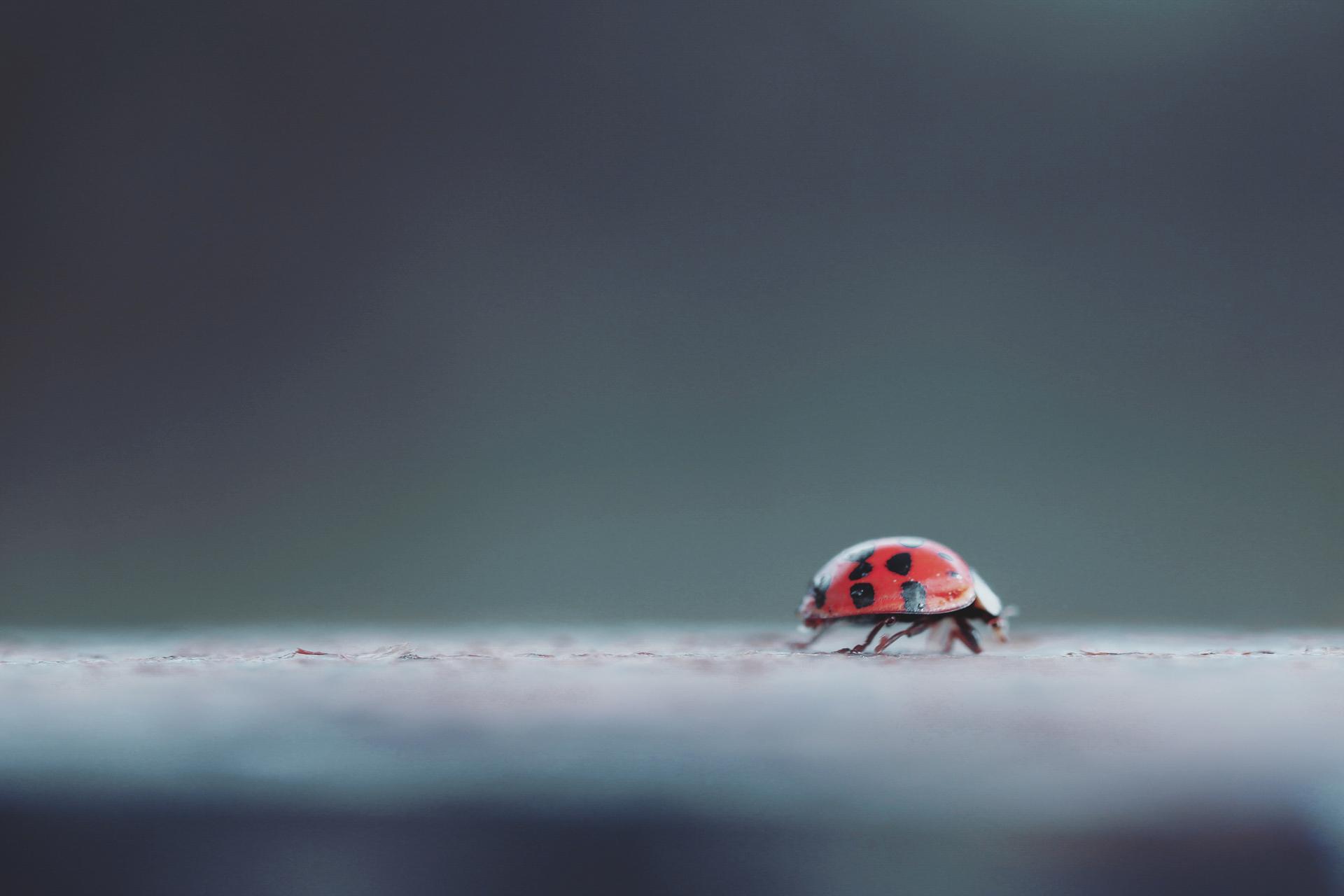 A ladybug crawling on a fence