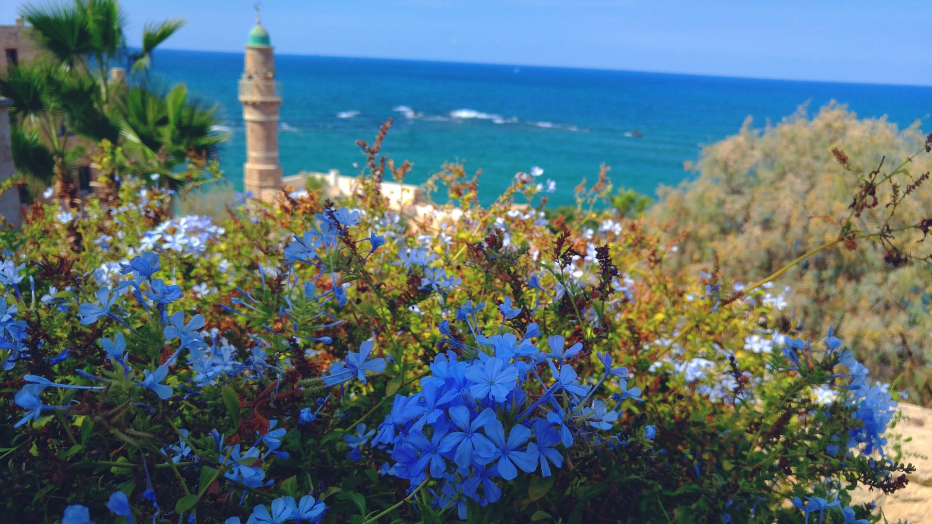 Close-up of blue flowers | flower, wildflower, sea, closeup