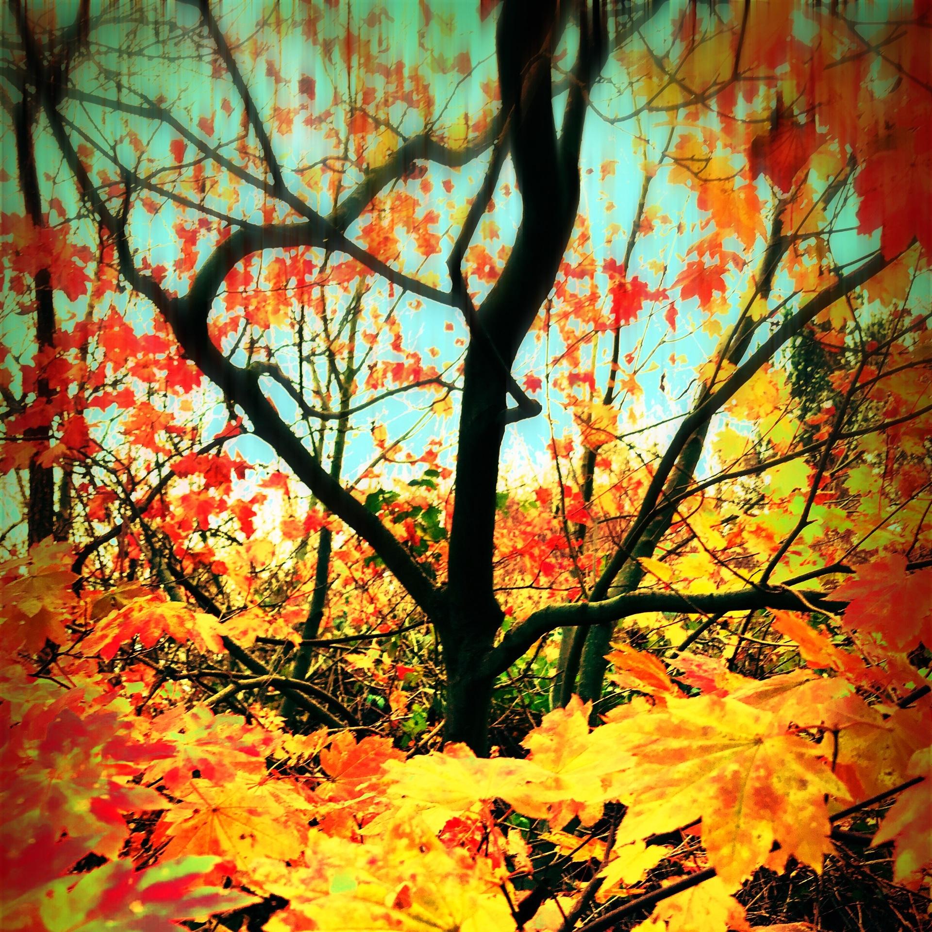 Autumnal maple tree abstract