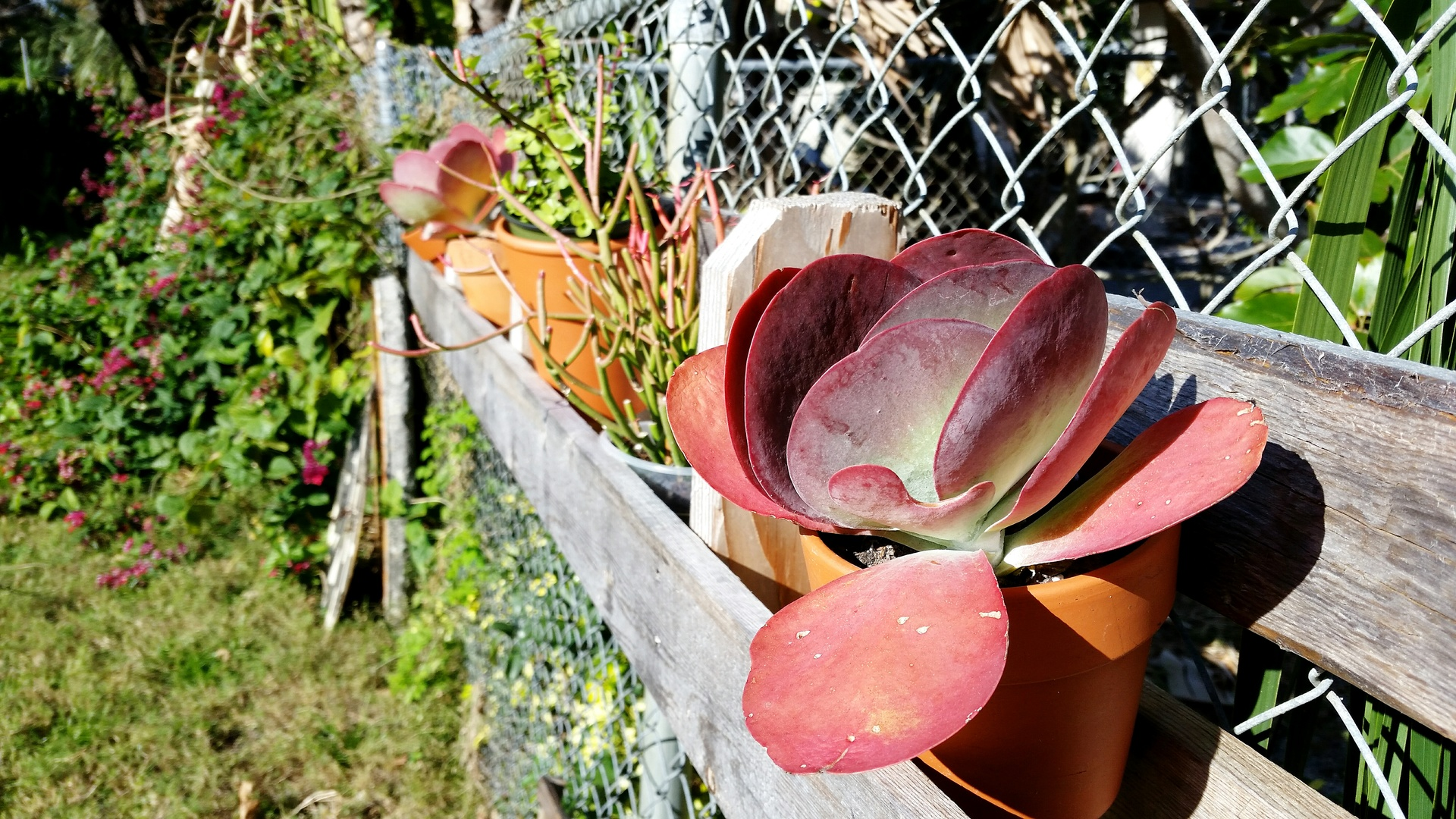 Foap Potted succulent plants along a chain link fence stock