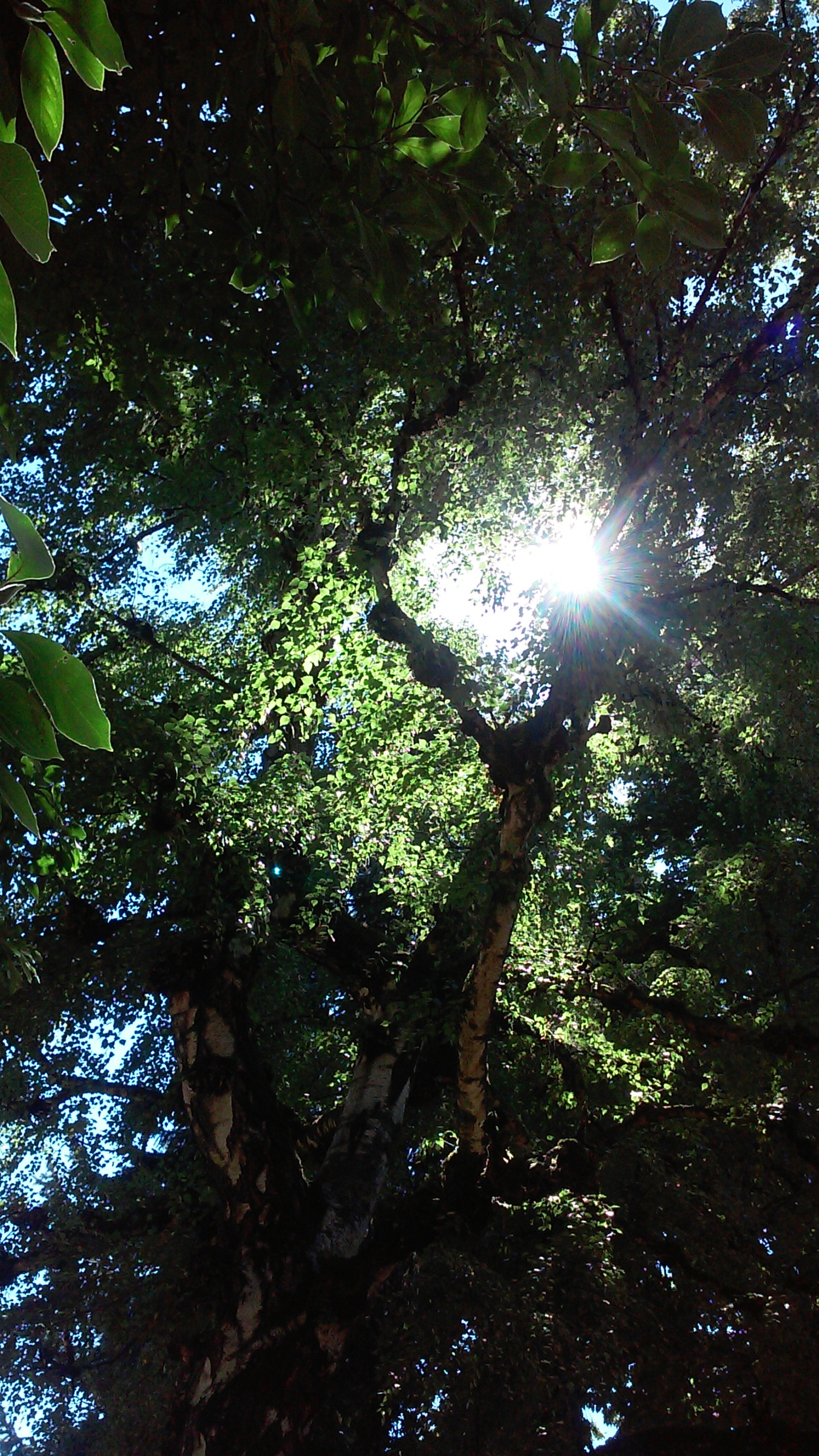 Branches. Sun shining through the branches of an old tree in Lone Fir cemetery, Portland, OR.