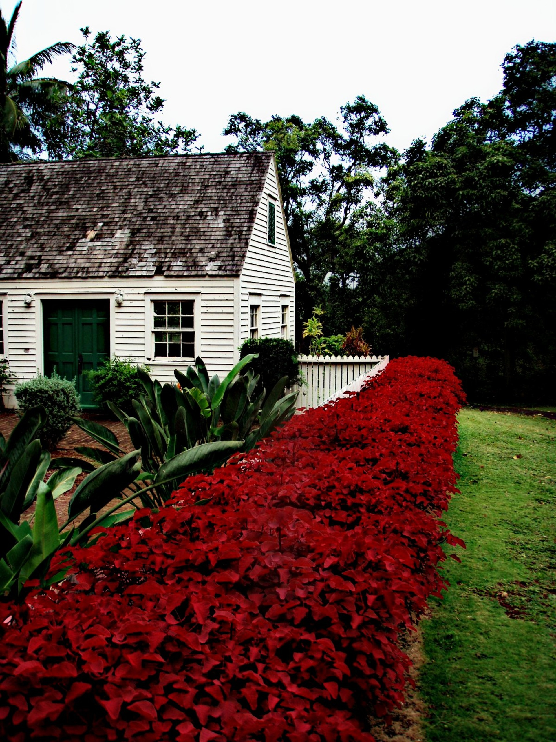 Old house. Old house | zolip., Old house, flower, nature