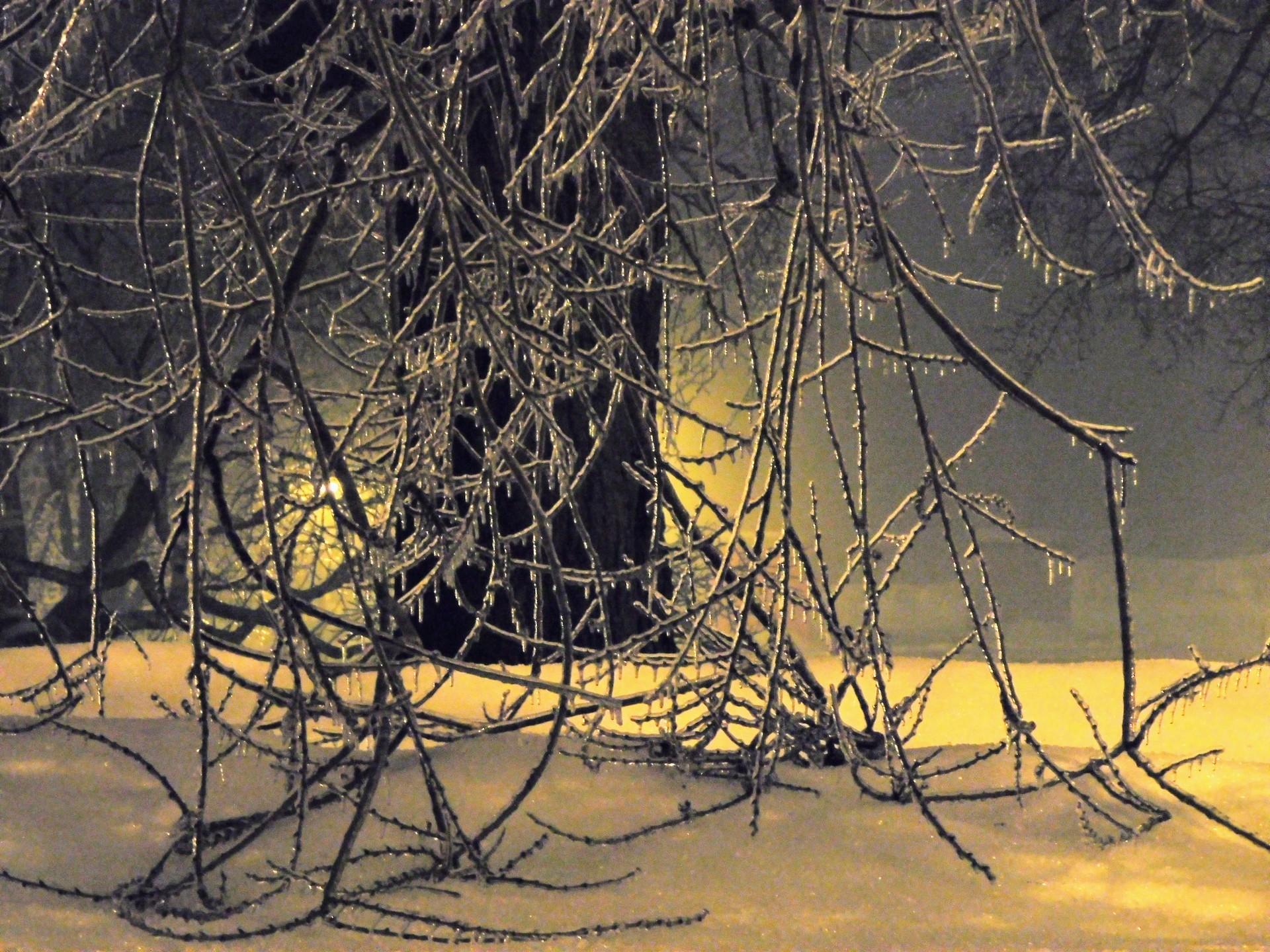 Frozen branches, ice storm | rick.cognyl.fournier, branch, dawn, landscape