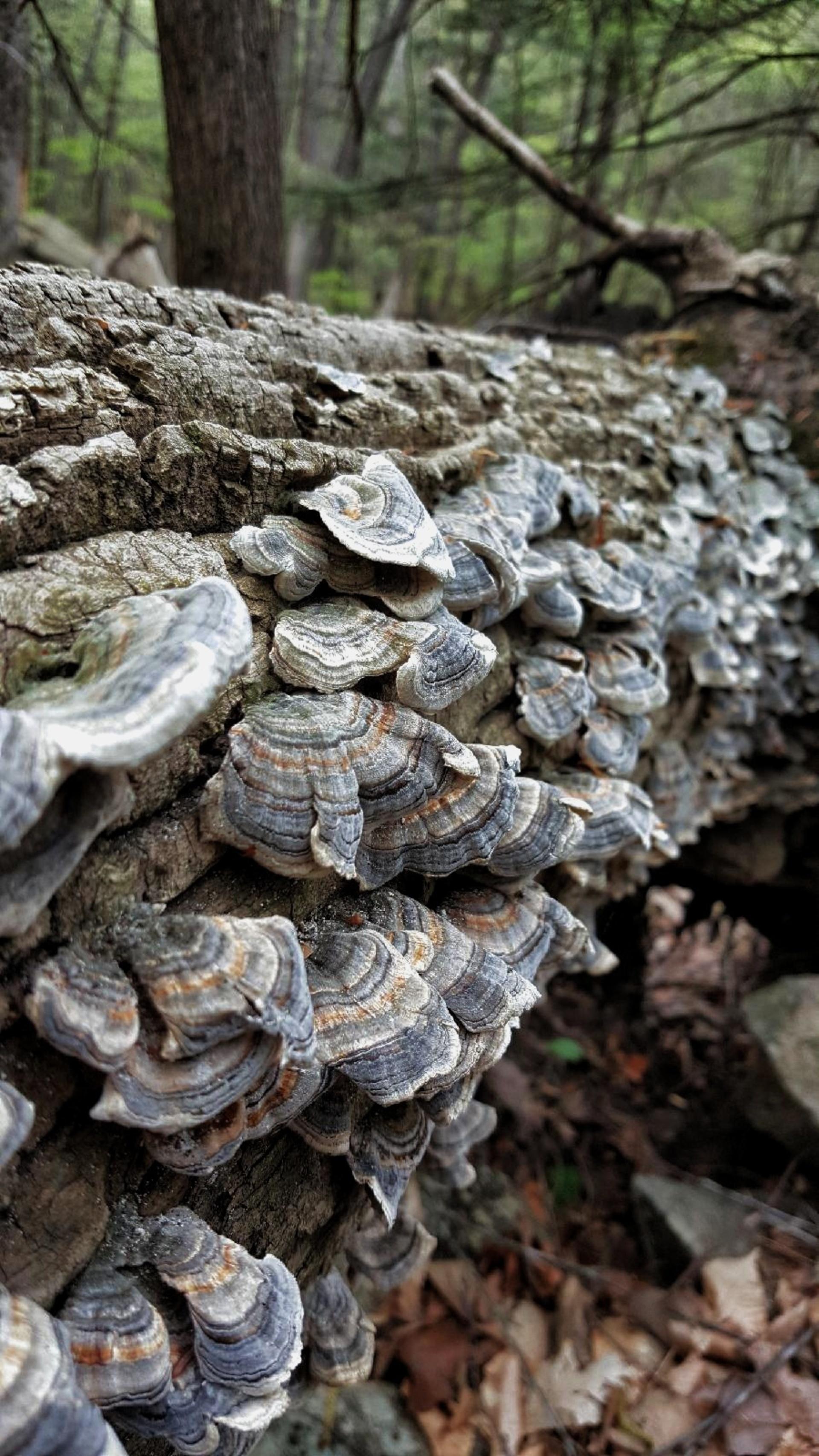 Mushrooms on a tree   log, tree log, closeup, bark