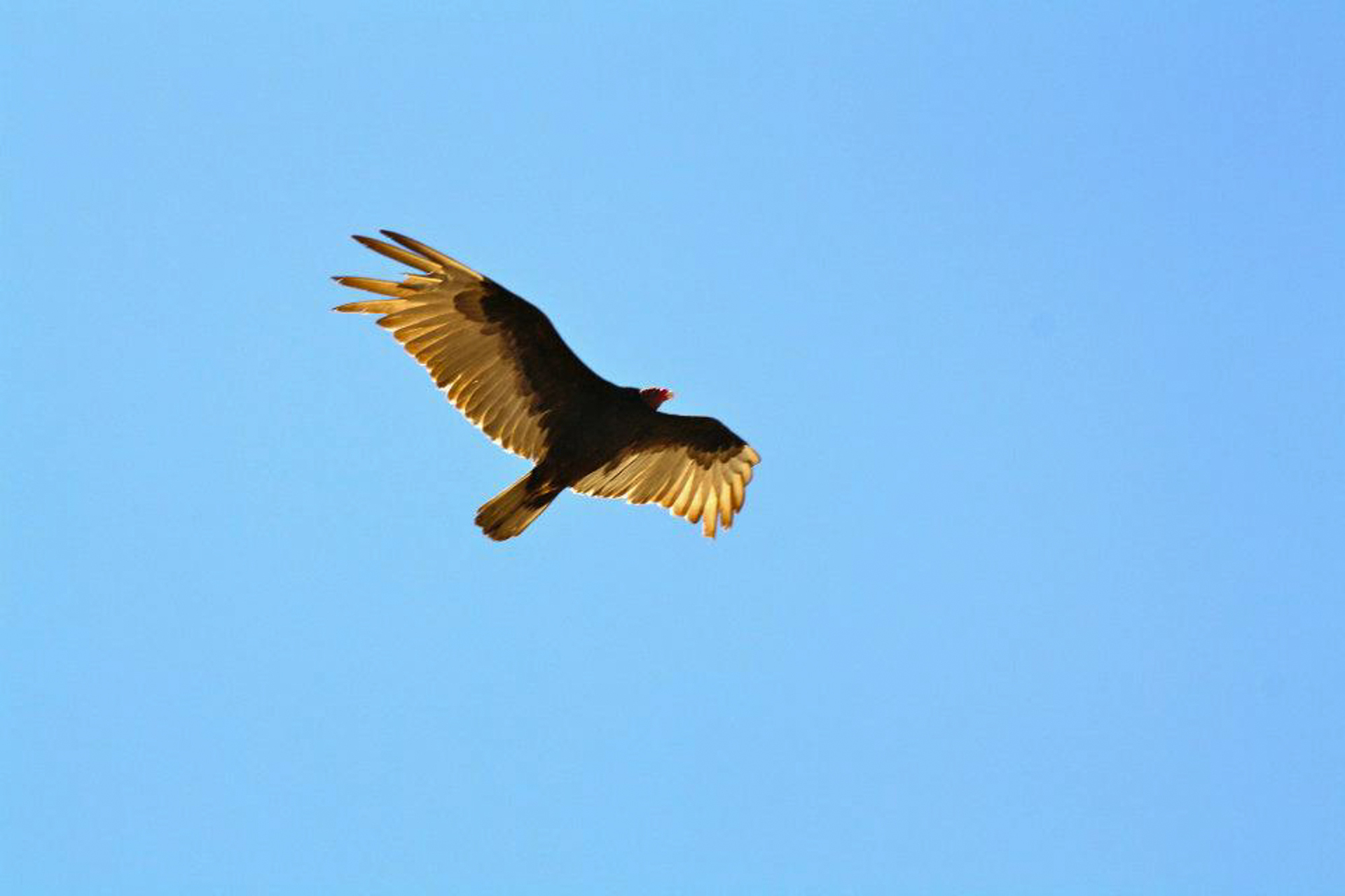 Poderío águila 🦅  | wing, side view, seagulls, daylight