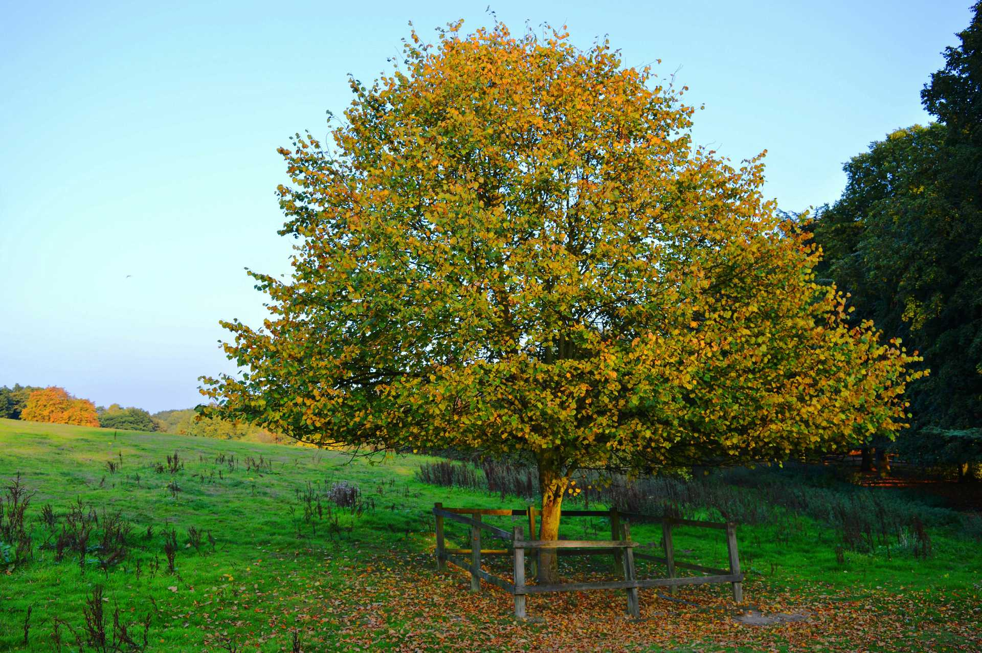 autumn landscape. autumn colors | madi19, branch, countryside, garden