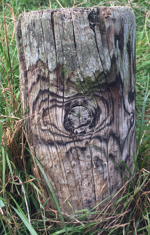 Long forgotten  | rural, park, texture, grass
