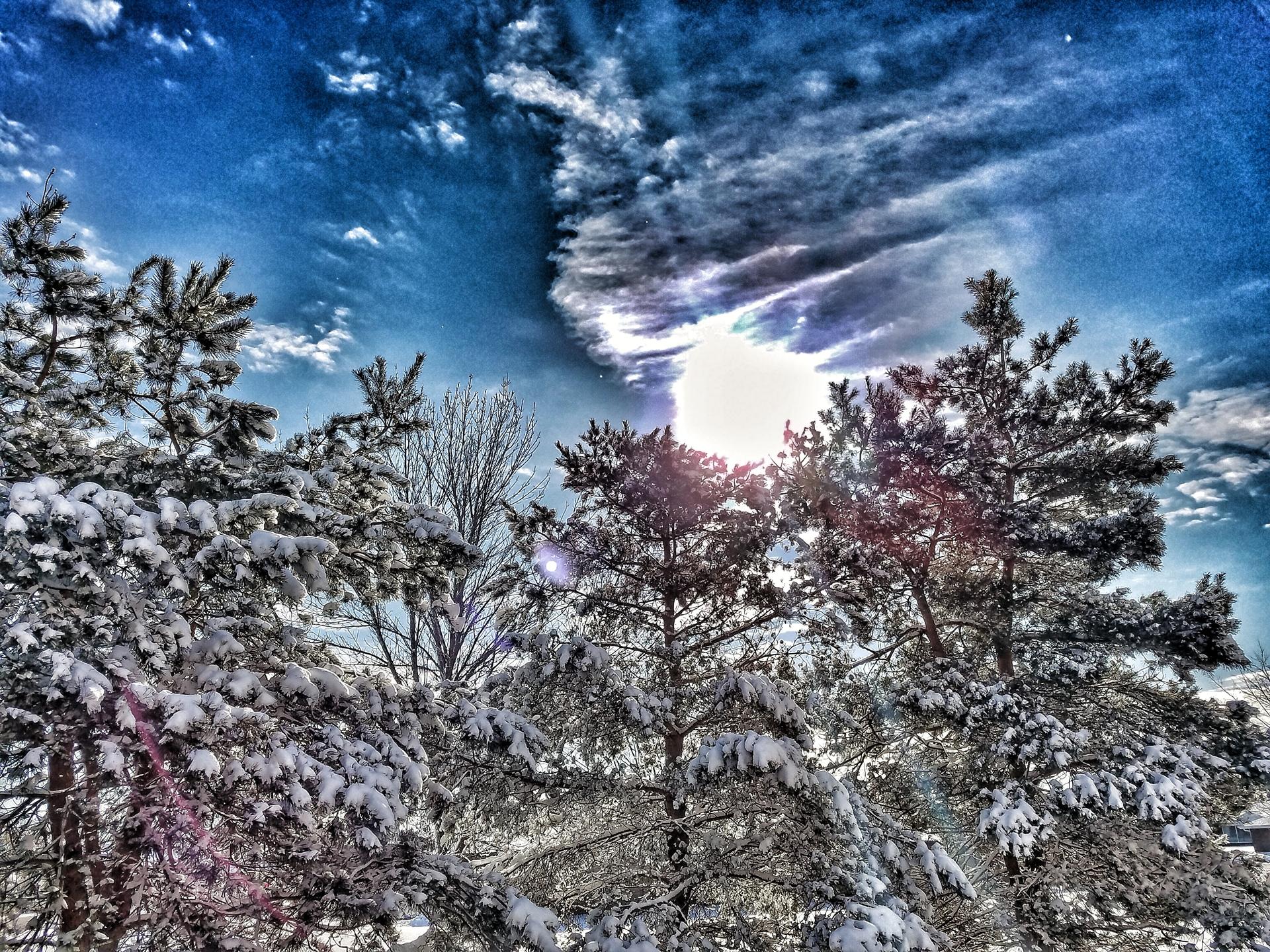 Fresh Snow | winter, tree, sun, snow