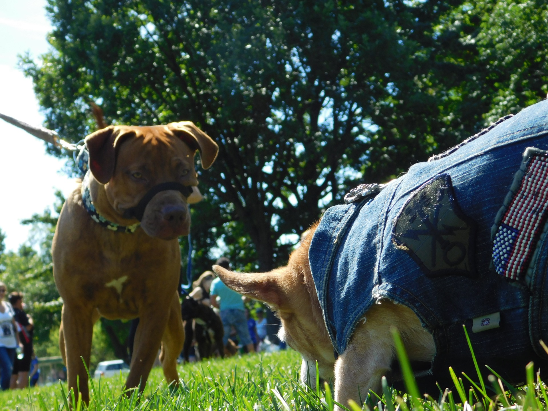 Dog days of summer   rick.cognyl.fournier, animal, canine, dog
