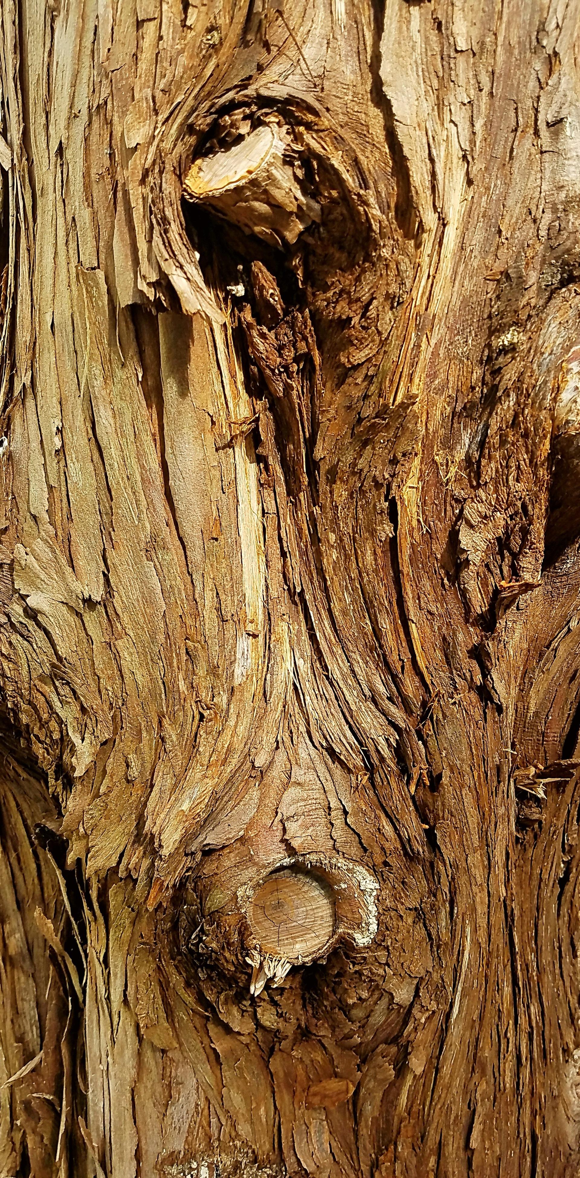 Peeling Bark 2 | ginalucia82, tree, bark, wood