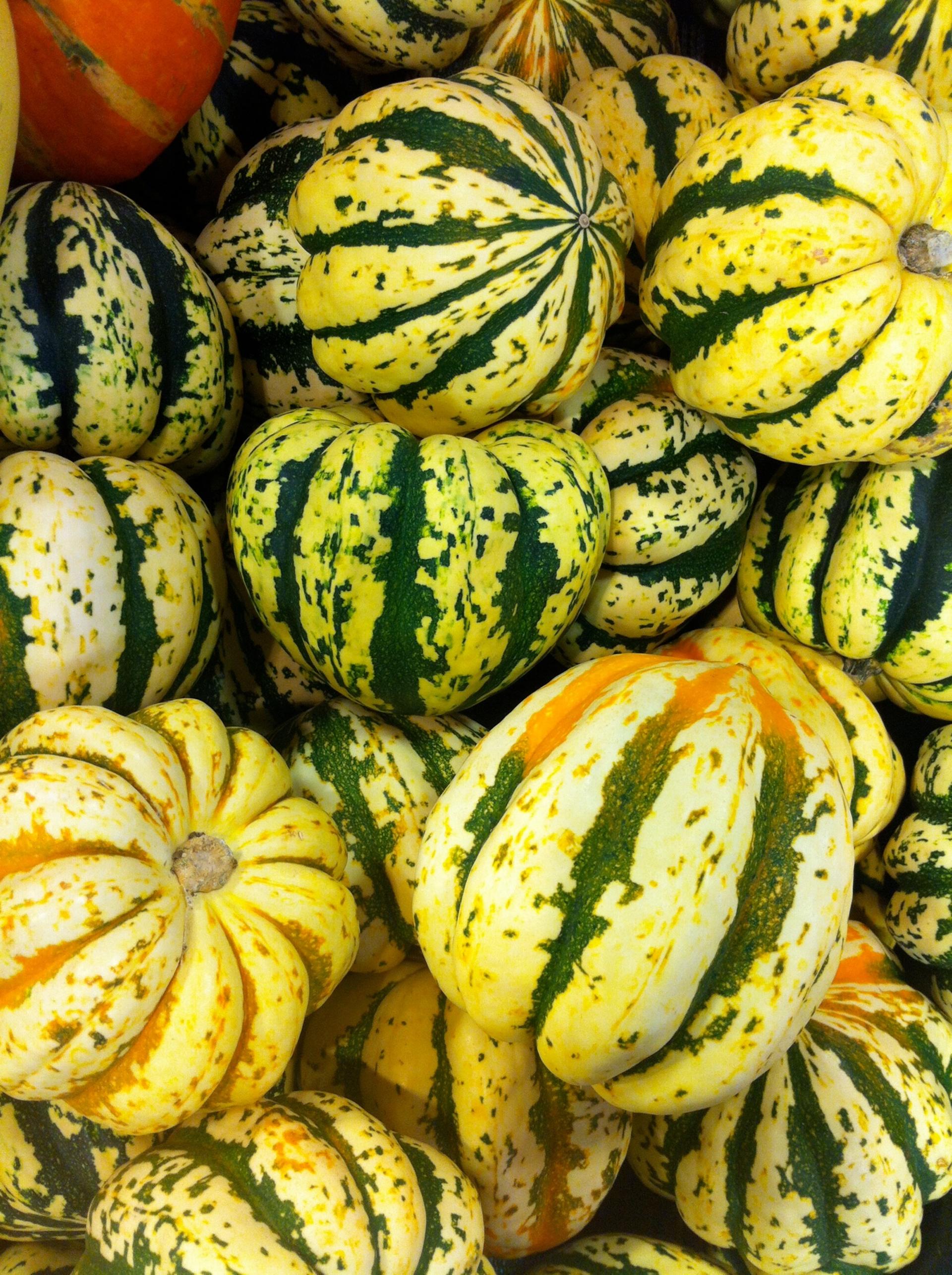 Squash and pumpkins during the autumn season.